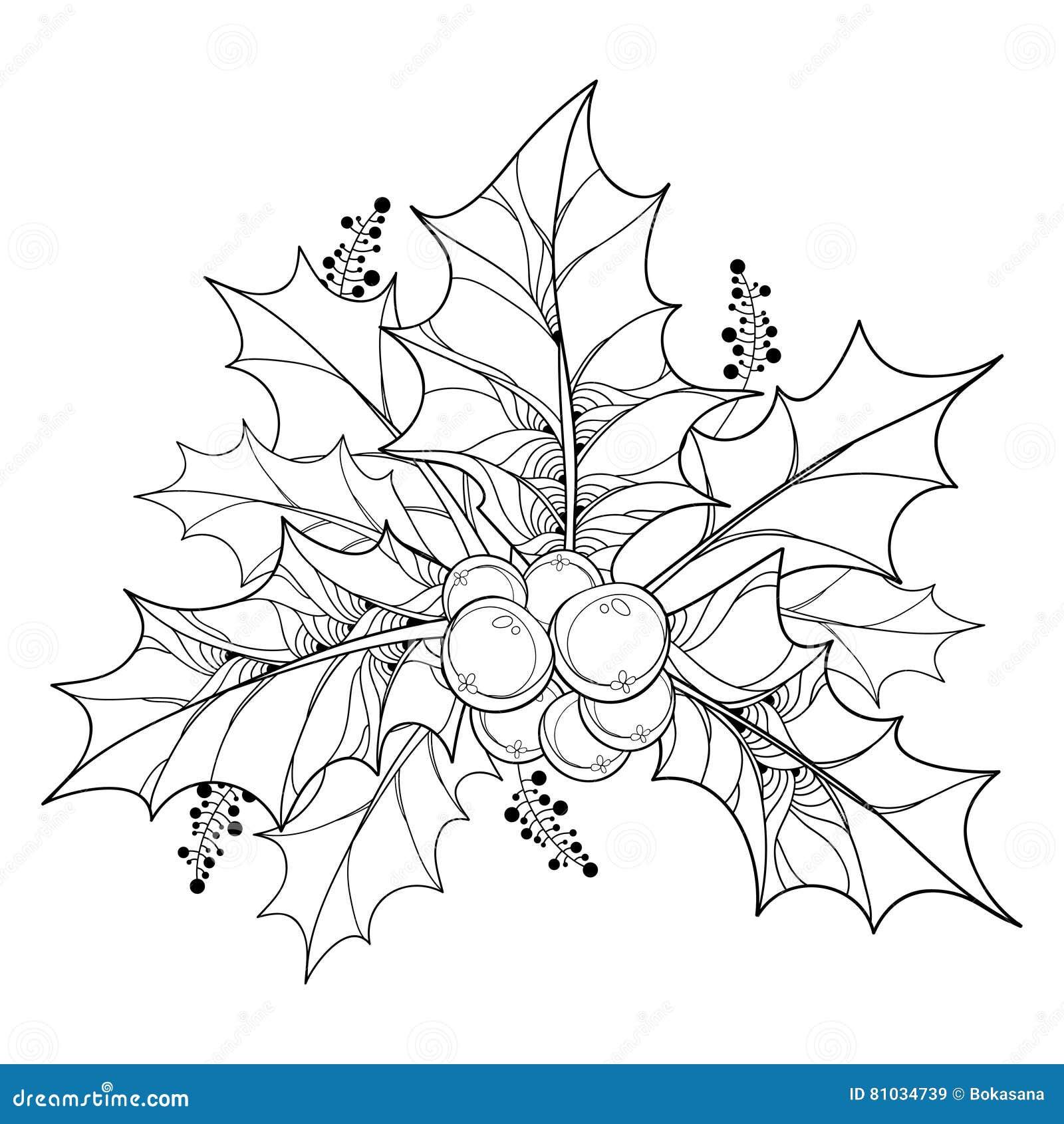 与概述冬青属或欧洲霍莉叶子和莓果的传染媒介分支在白色背景