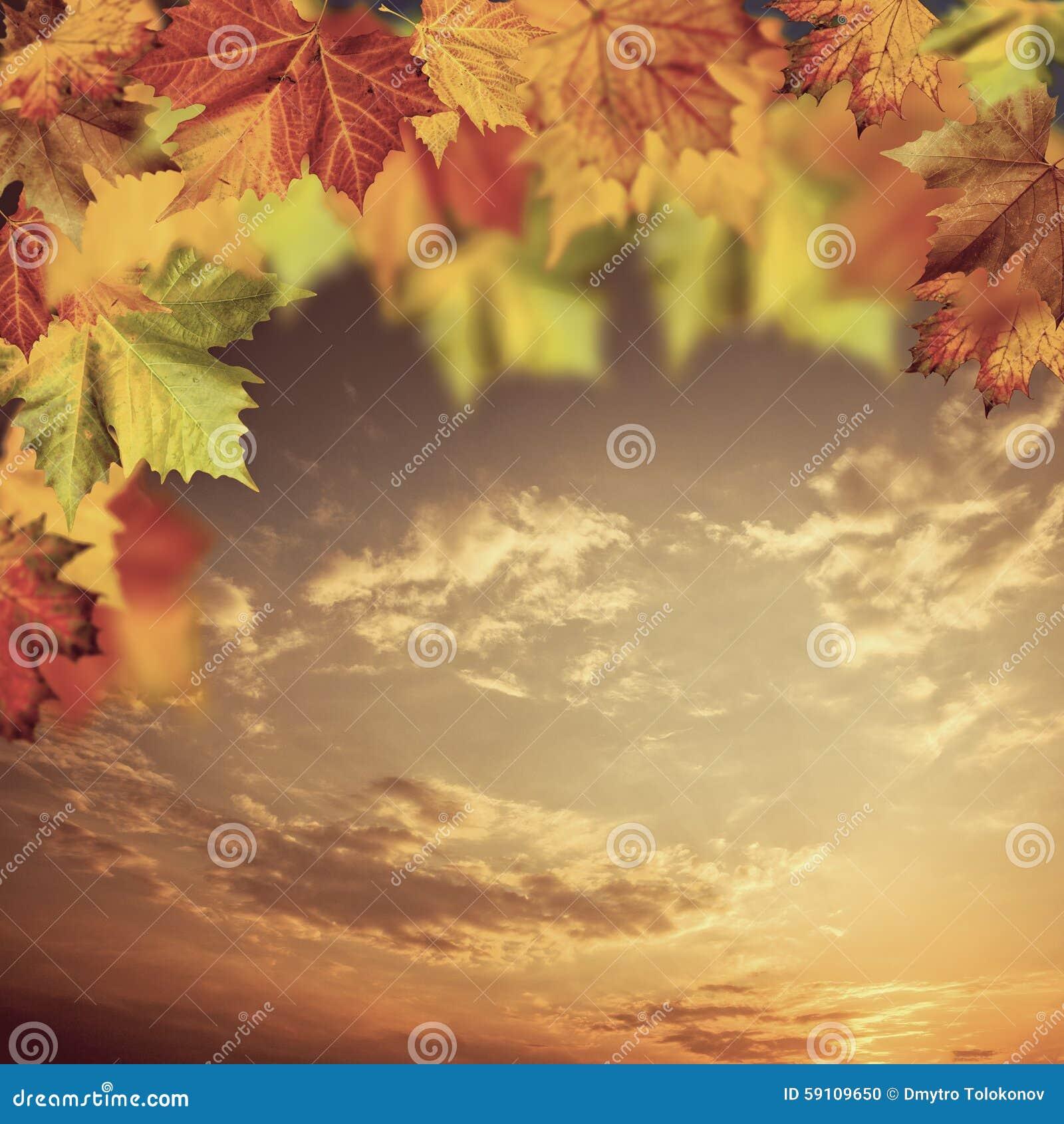 与槭树的中立秋季背景