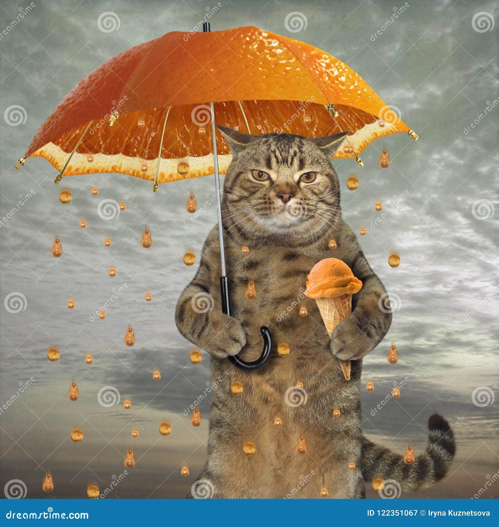 与橙色伞的猫