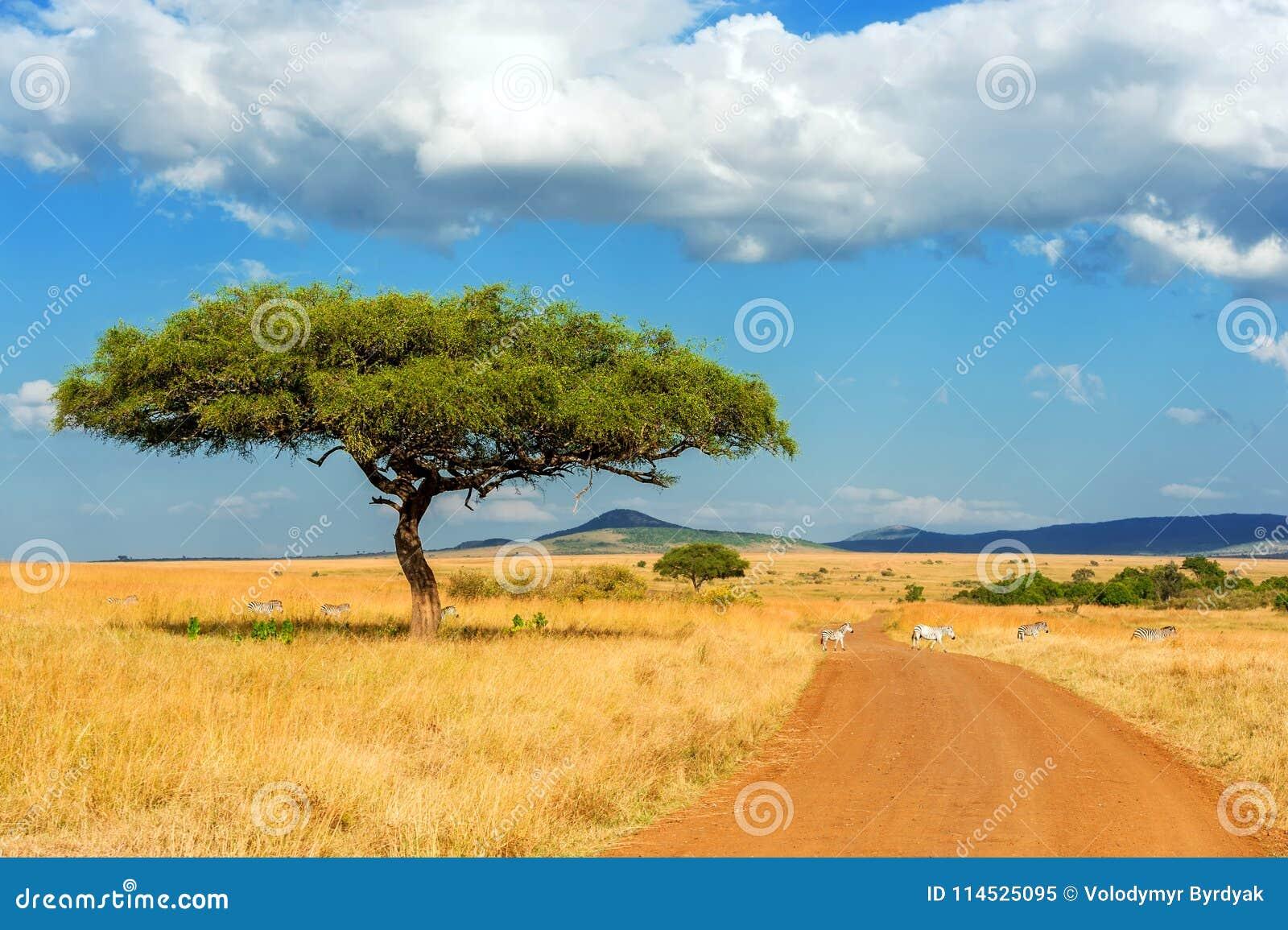 与没人的风景树在非洲