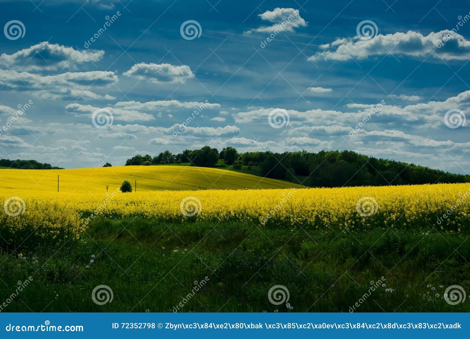 与油菜籽领域的风景