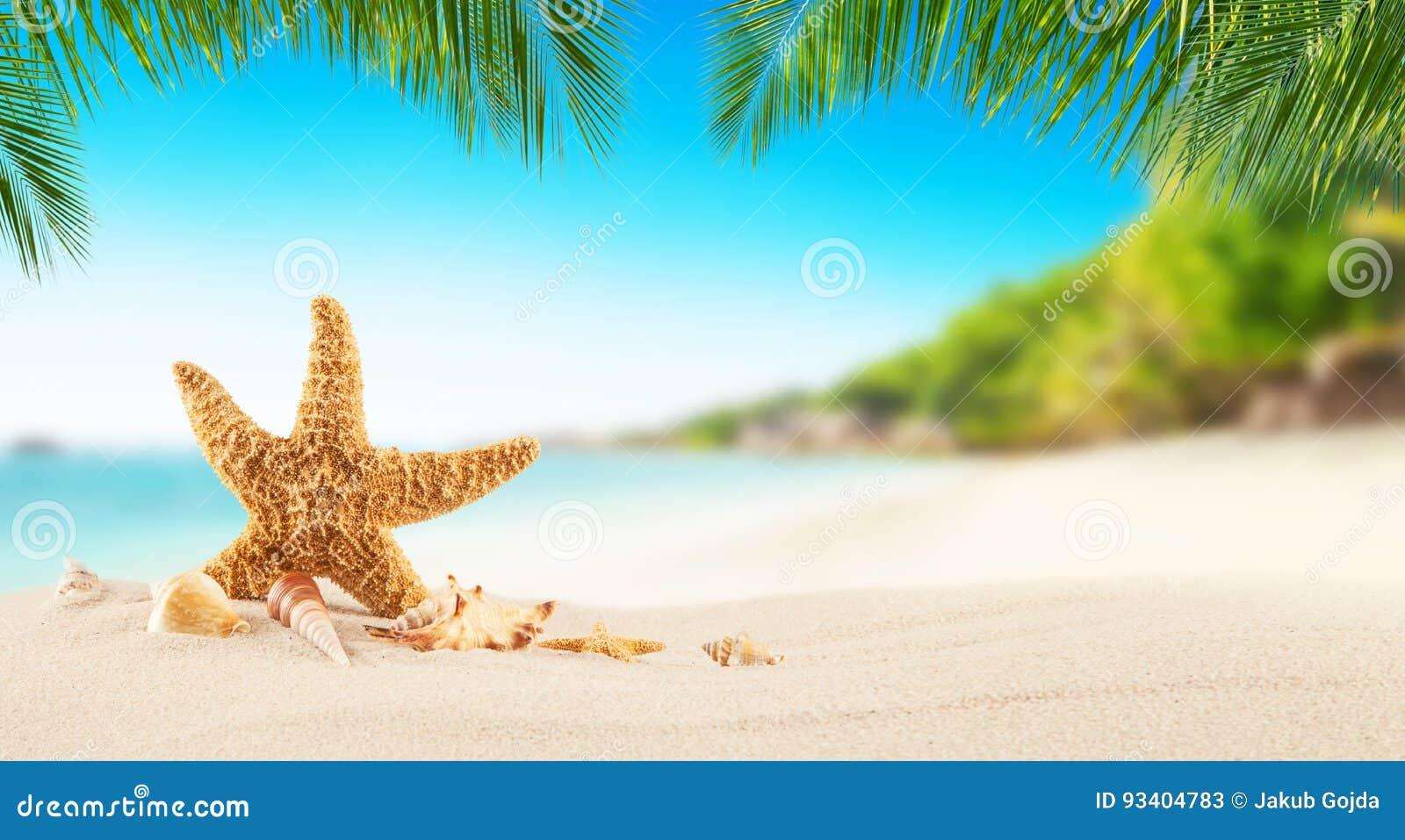 与海星的热带海滩在沙子,暑假背景