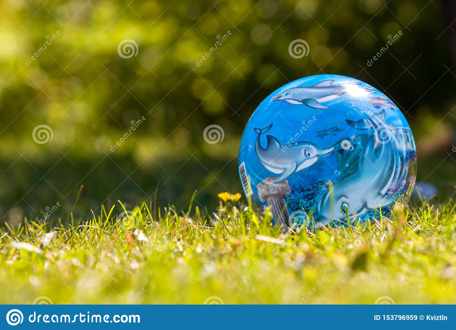 与海豚的蓝色球在与黄色草的鲜绿色的草说谎