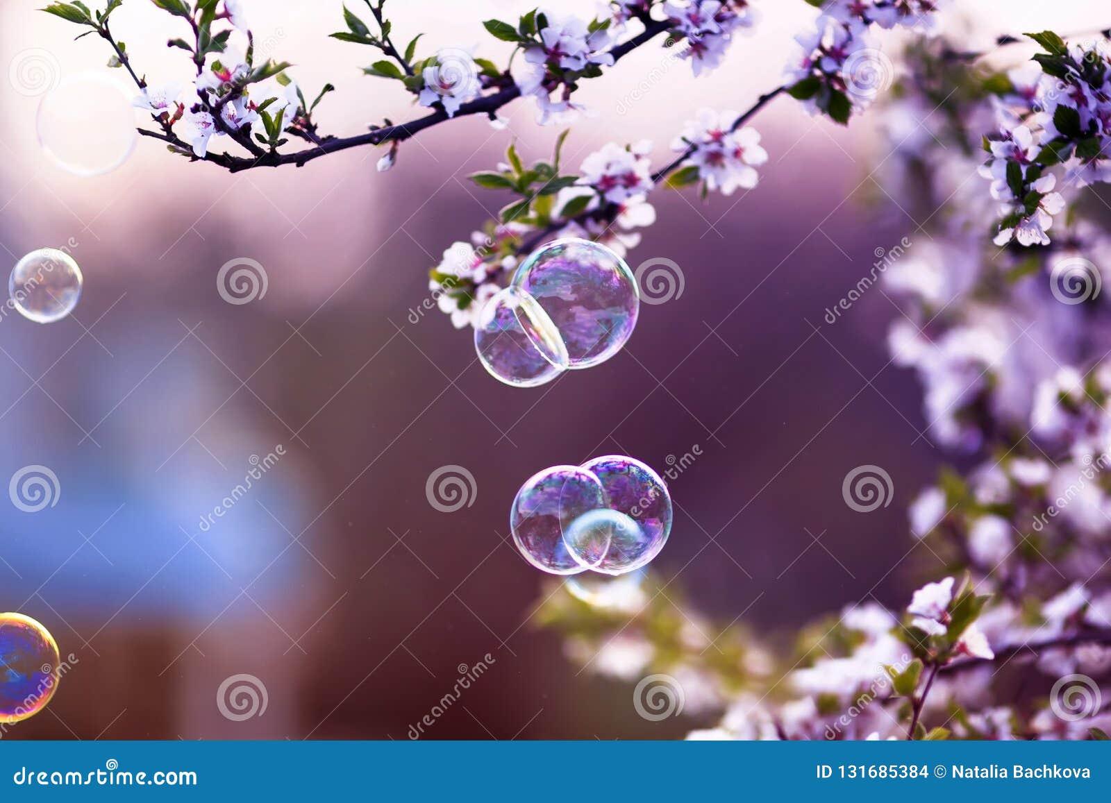 与淡光在阳光下在春天在樱花分支上的庭院的飞行的肥皂泡的欢乐背景