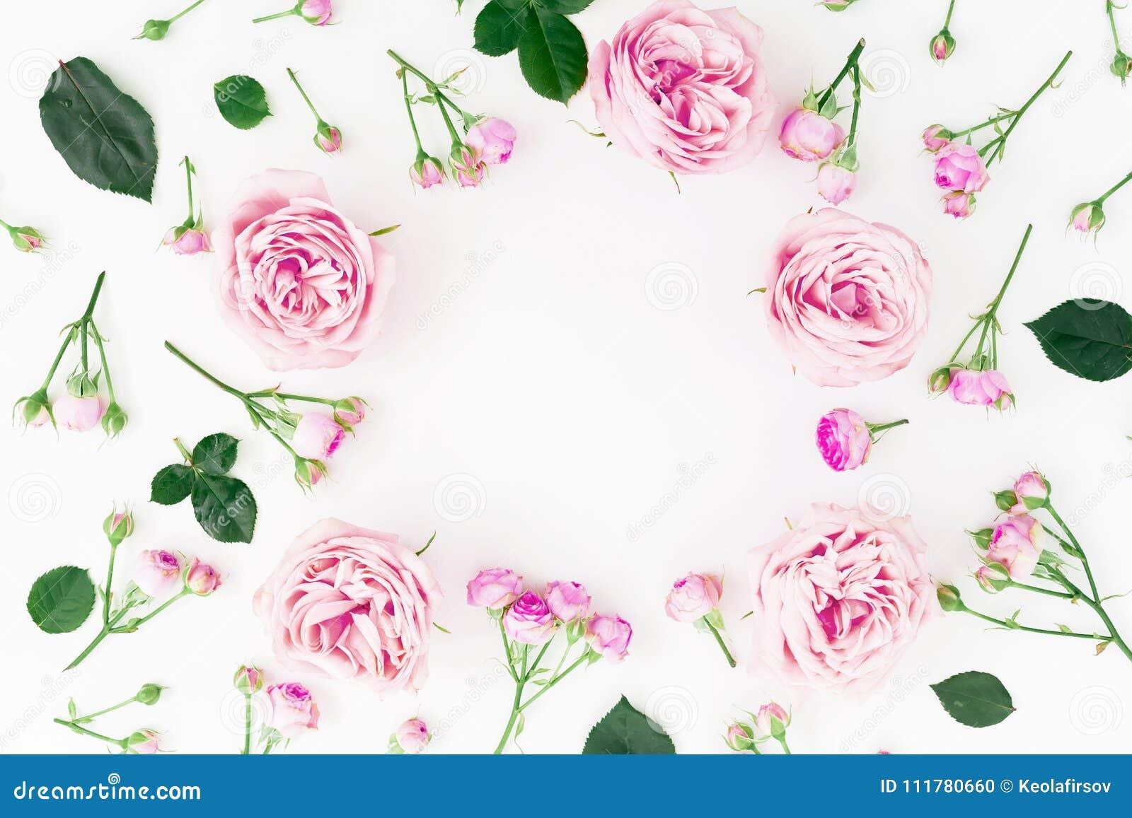 与淡色玫瑰和叶子的花卉圆的框架在白色背景 平的位置,顶视图 背景设计框架绿色