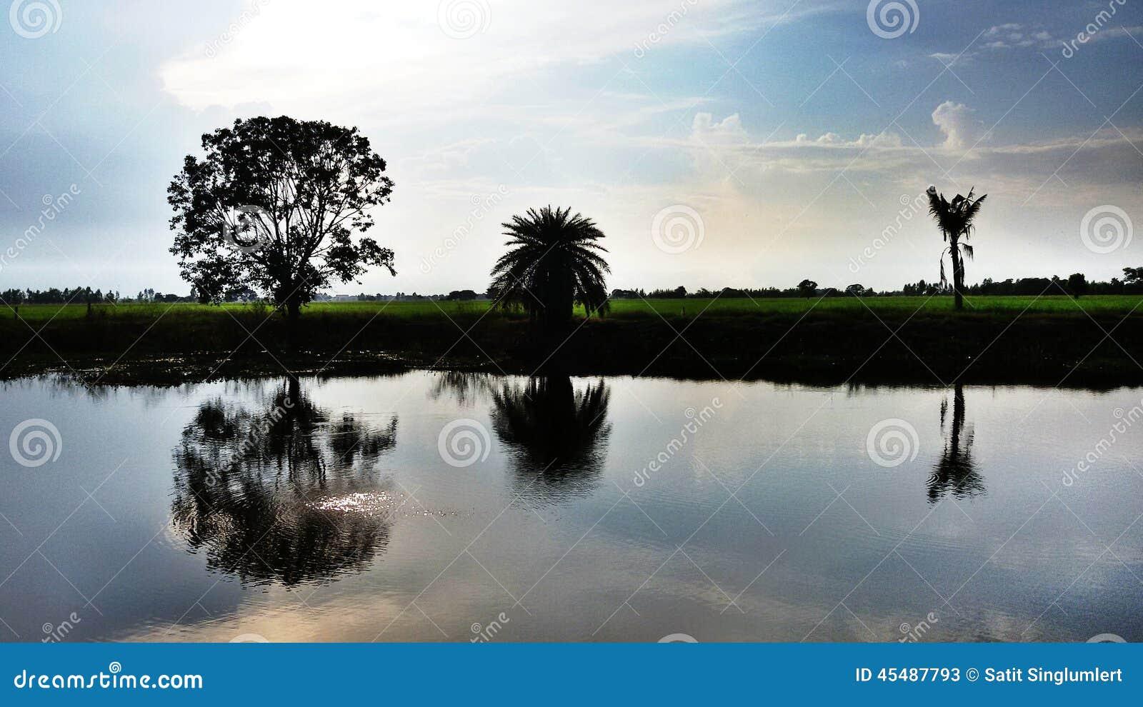 与湖的米领域黑暗的