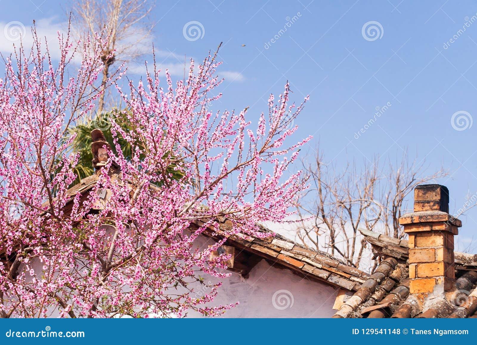 与烟囱和开花的美丽的老迷人的中国村庄