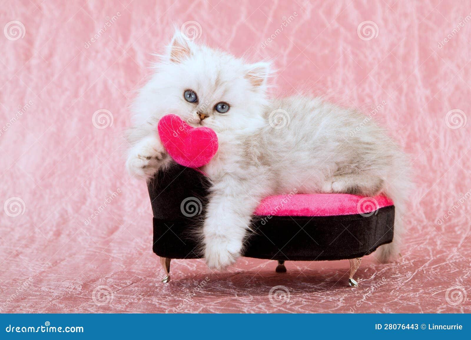 与爱重点的逗人喜爱的小猫