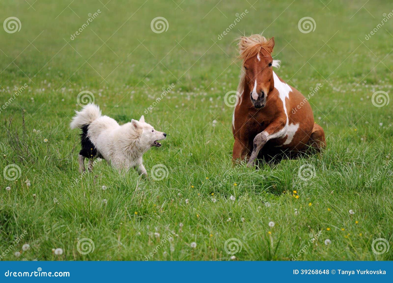 农夫色人和狗_与狗的马戏剧