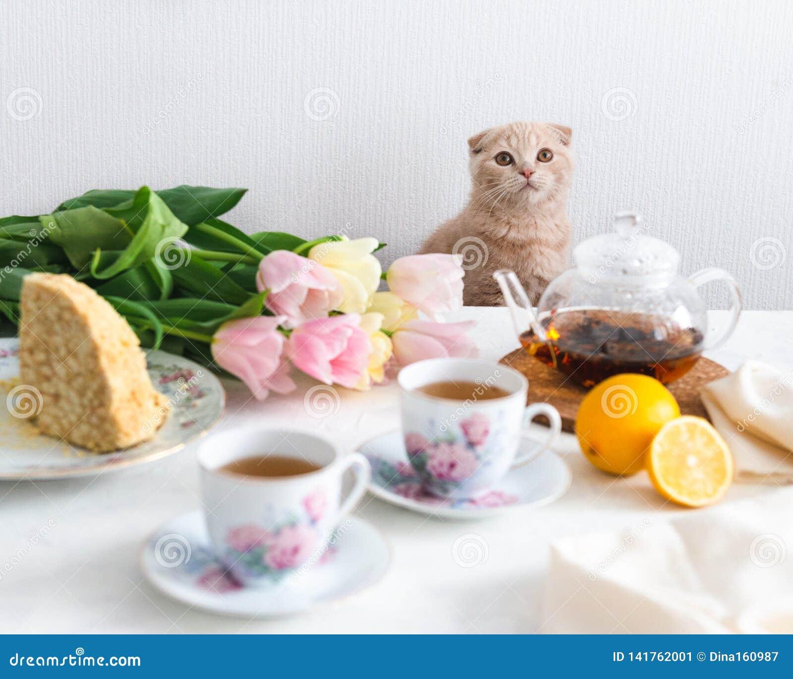 与猫的茶会 自创蛋糕、柠檬、茶壶和郁金香在背景 复制空间 母亲` s日概念