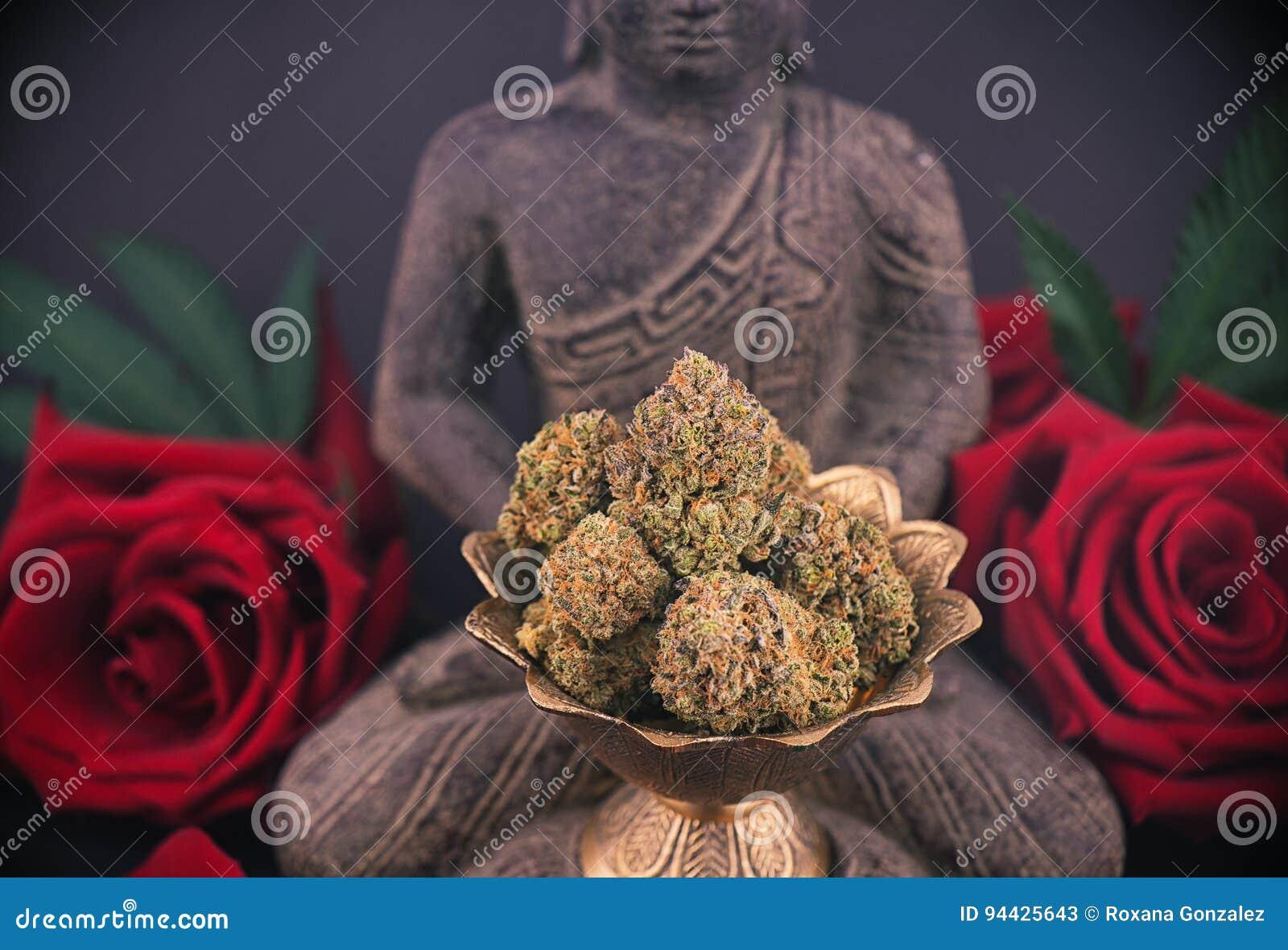 与玫瑰和大麻的禅宗背景发芽-医疗大麻