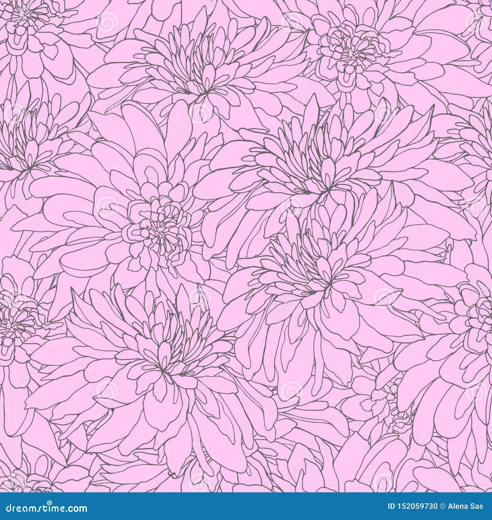 与玫瑰色菊花的无缝的样式 设计的不尽的纹理 与菊花的传染媒介背景您的
