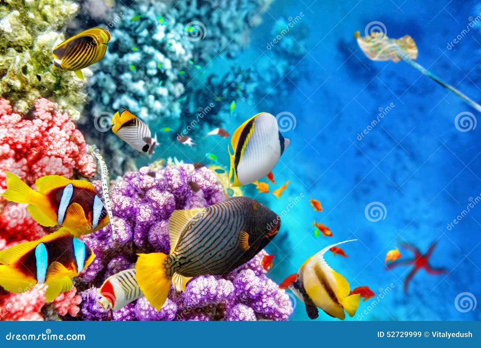 与珊瑚和热带鱼的水下的世界