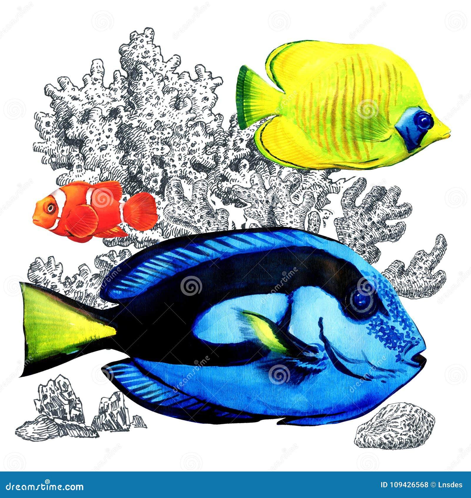 与珊瑚的海洋珊瑚鱼,被隔绝 在水族馆的五颜六色的海水鱼 番红花