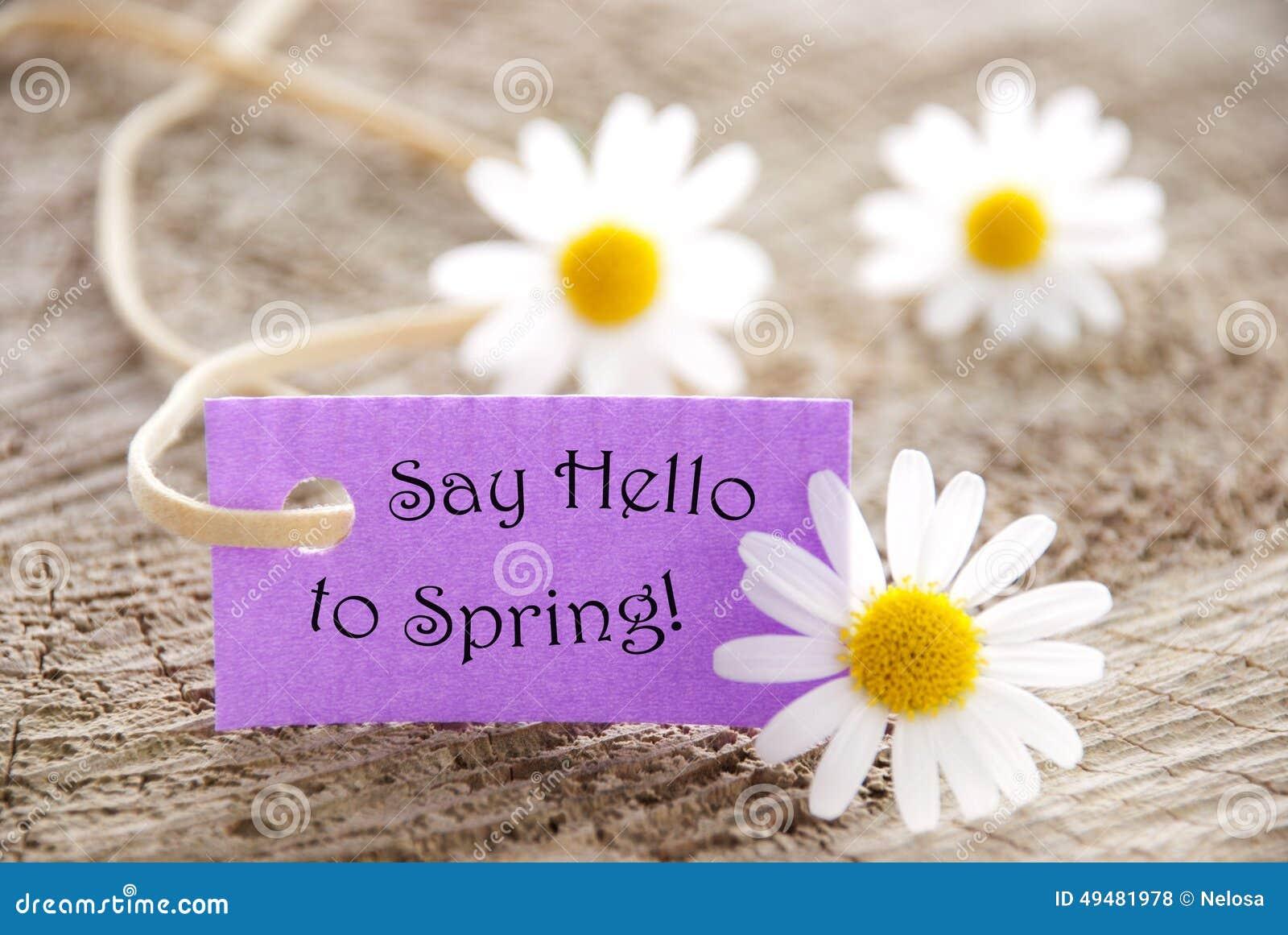 与生活行情的紫色标签向春天和延命菊开花问好