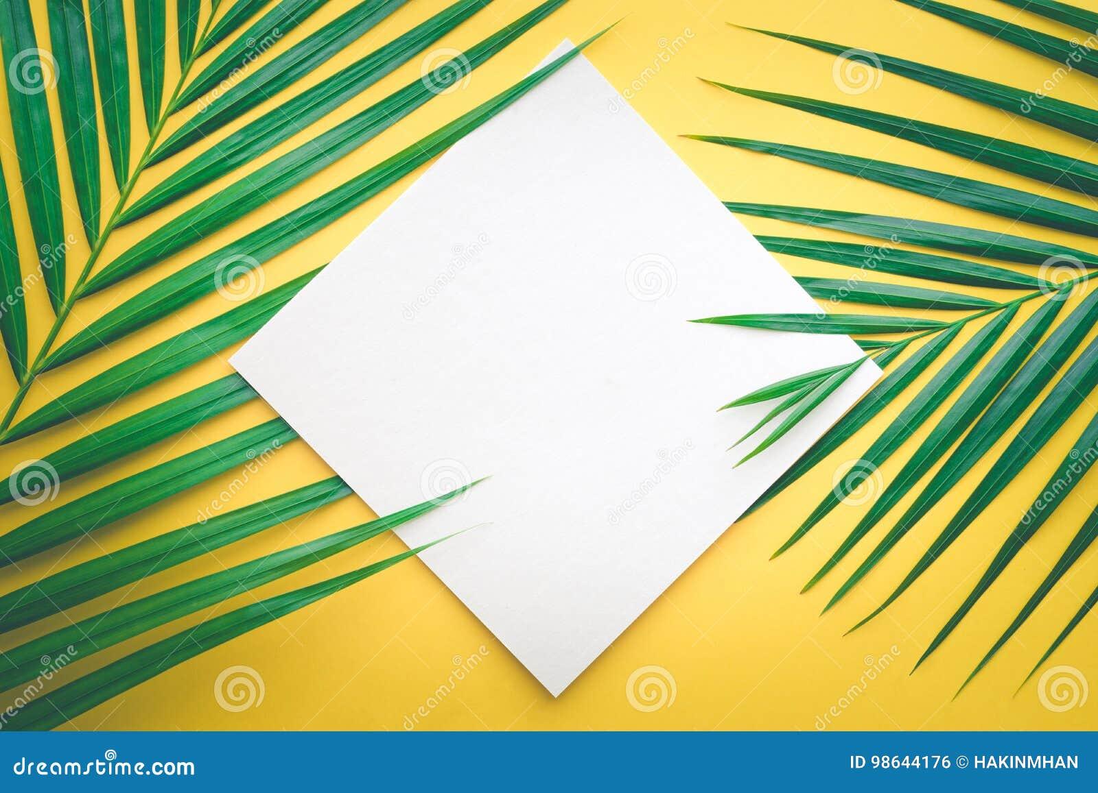 与白皮书插件边框的热带棕榈叶在柔和的淡色彩