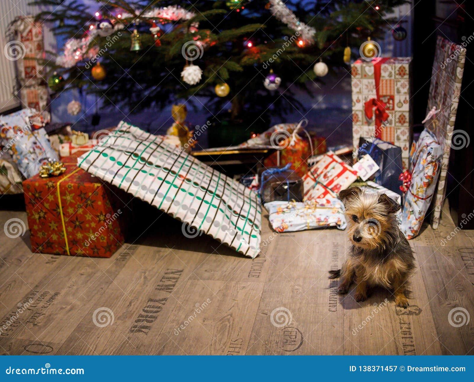 与的逗人喜爱的小犬座礼物和圣诞树