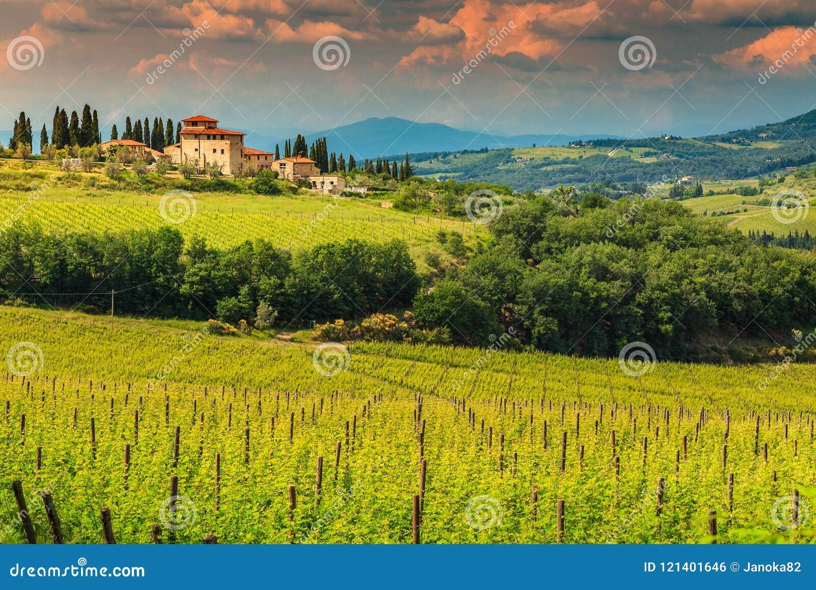 与石房子,托斯卡纳,意大利,欧洲的意想不到的葡萄园风景