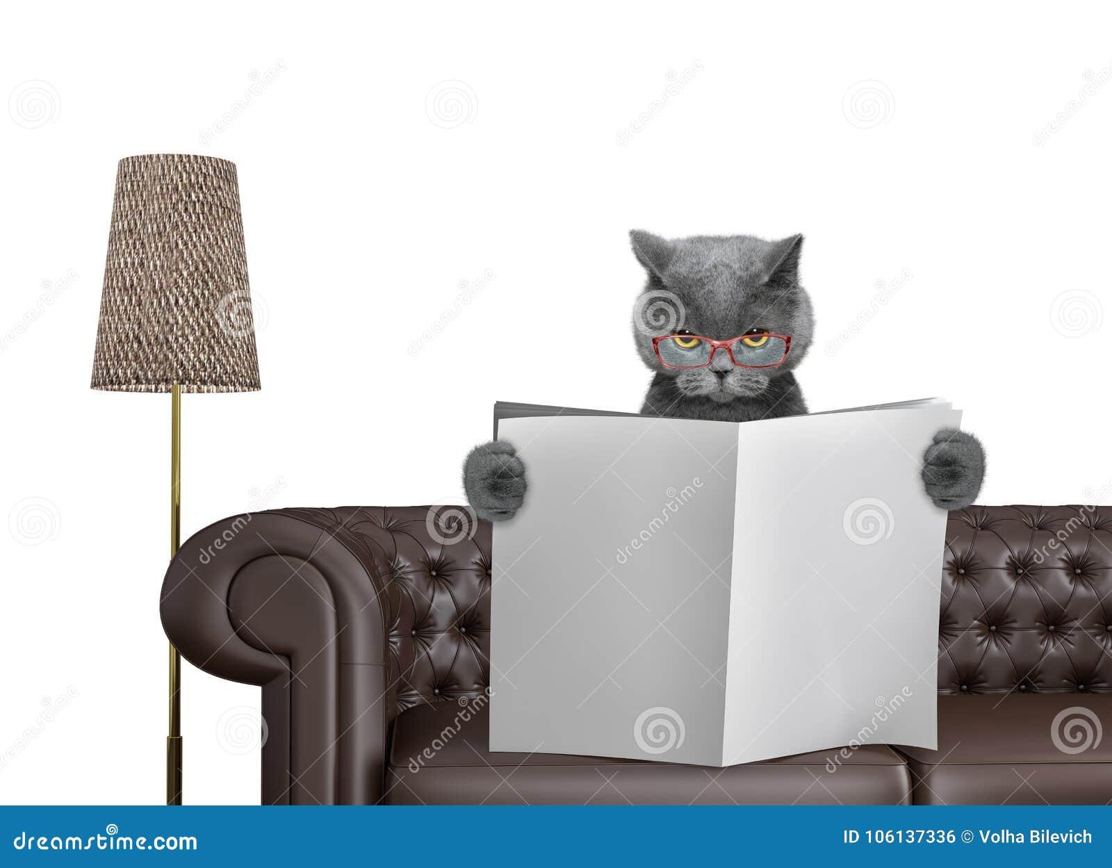 与空间的逗人喜爱的猫读书报纸在沙发的文本的在客厅 查出在白色