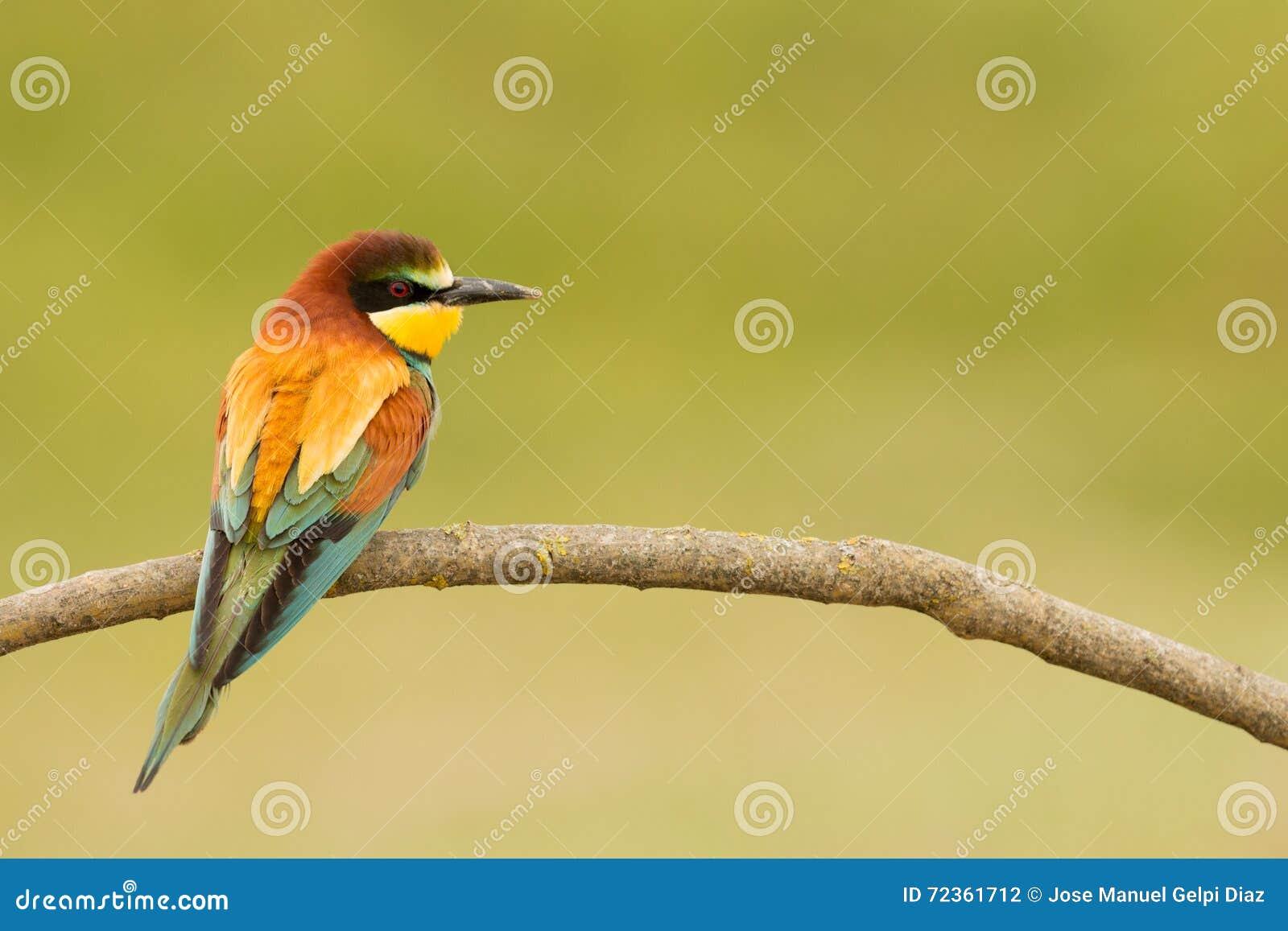 与精密全身羽毛的小鸟