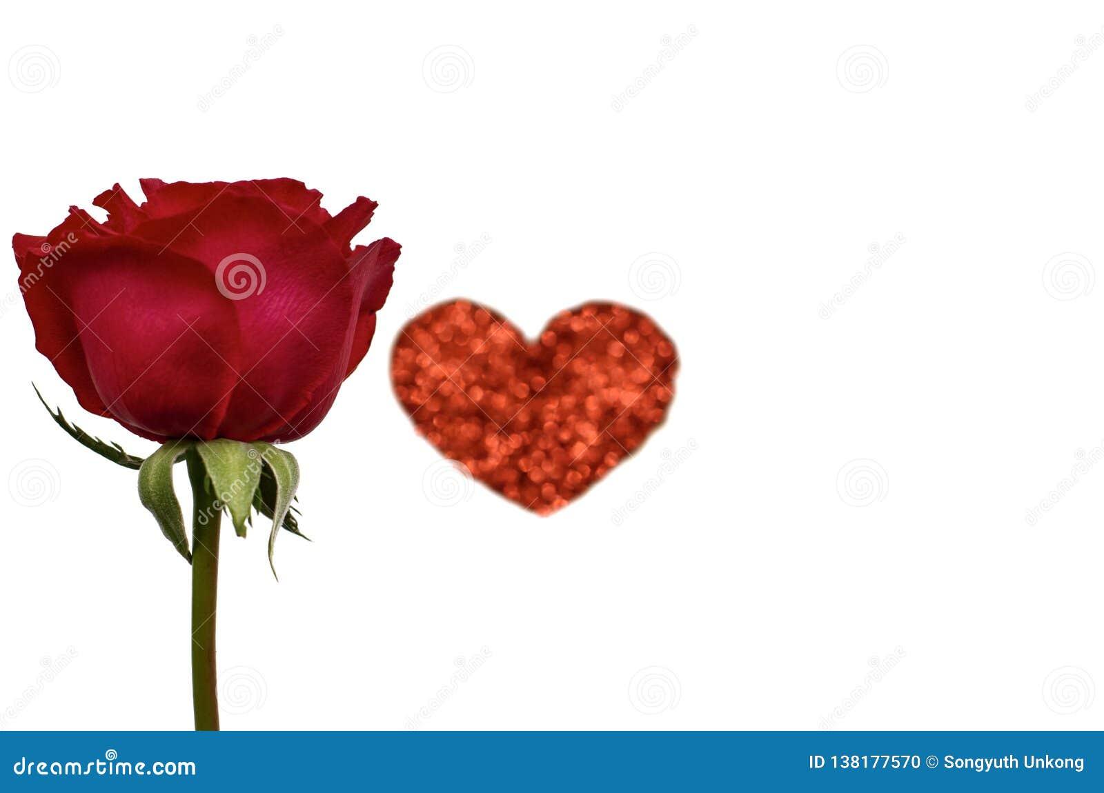 与红色心脏爱形状的一朵唯一红色玫瑰