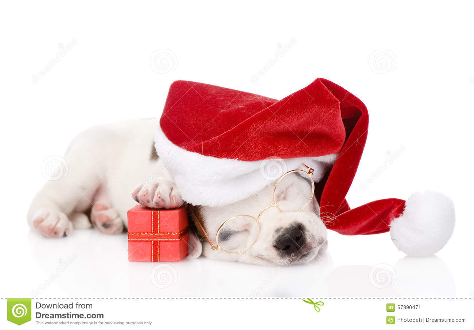 与红色礼物盒和红色圣诞老人帽子的小狗 查出在白色