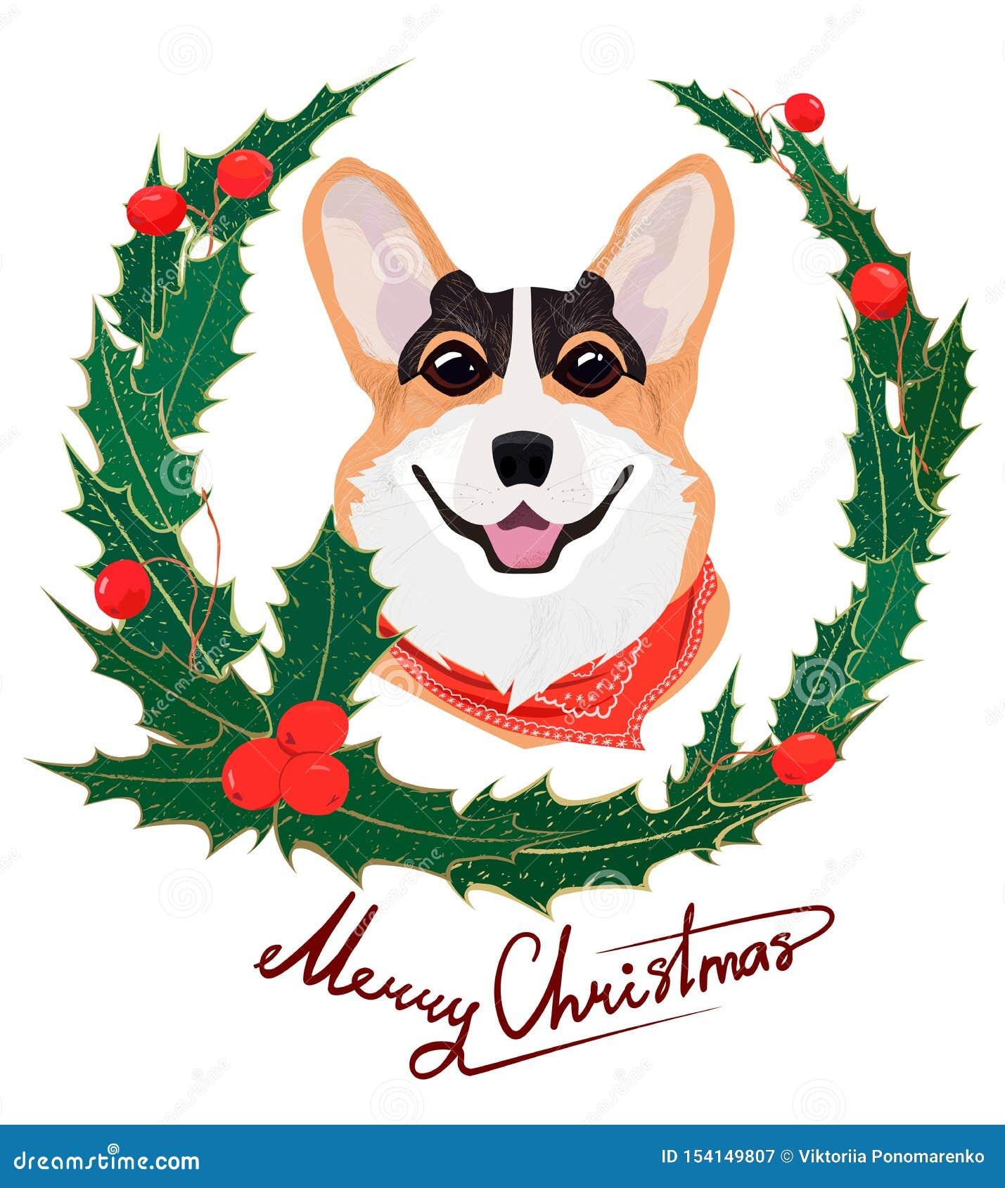 与红色绷带和霍莉圣诞节花圈的红发狗威尔士小狗 新年结构的绿色叶子和霍莉莓果