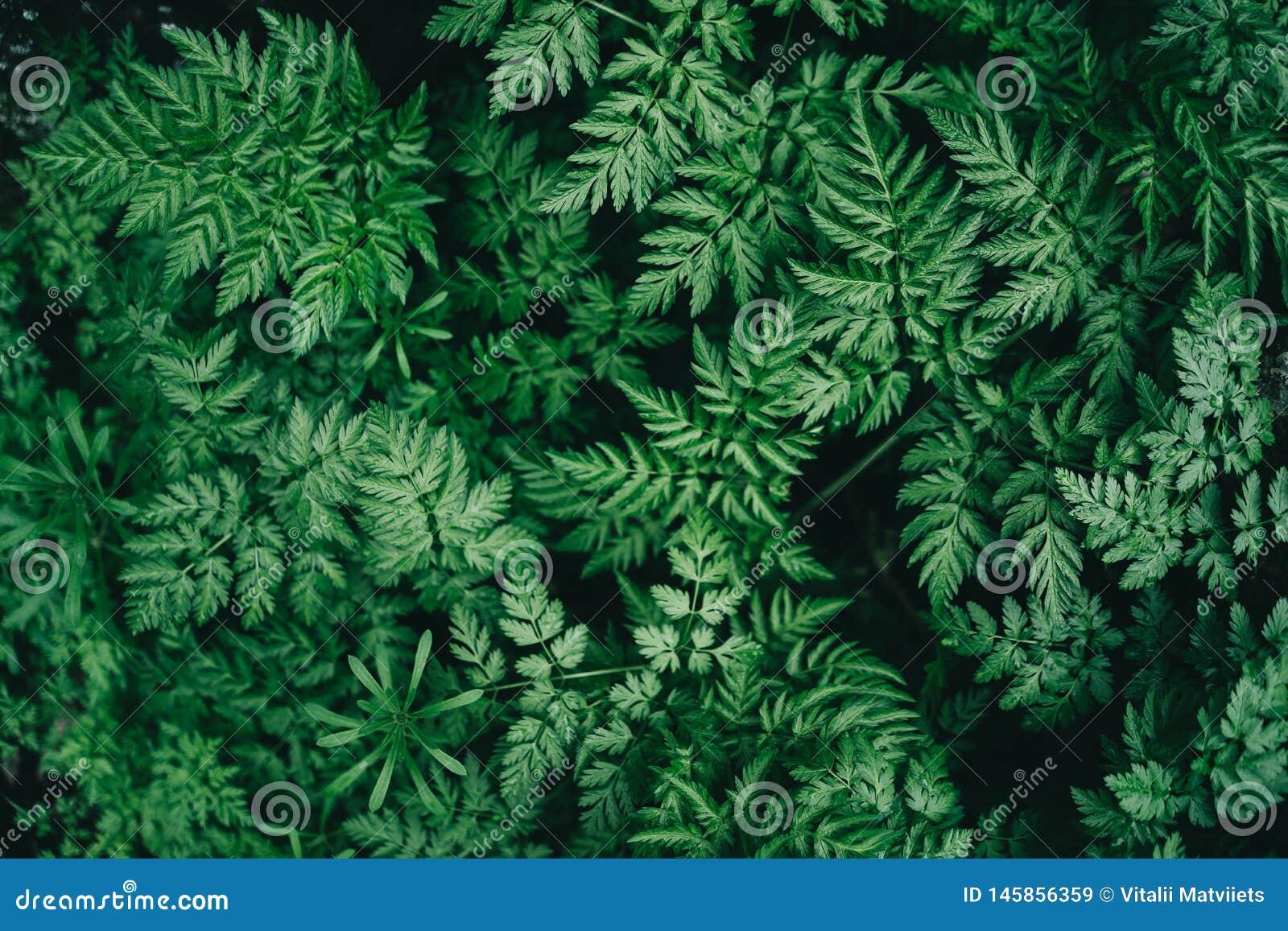 与绿色叶子的五颜六色的水多的背景象蕨叶子