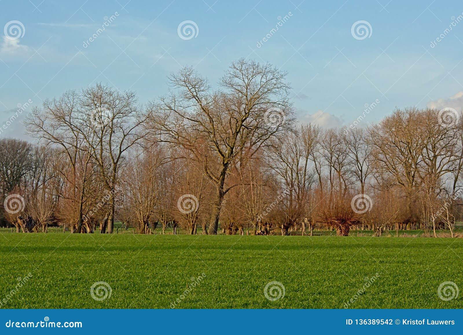 与绿色草甸的风景有枫树树和被修剪树枝的杨柳的在富兰德