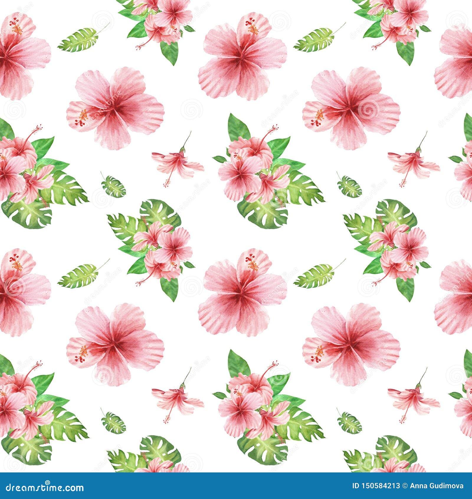 与绿色monstera叶子和桃红色木槿花的水彩花卉热带无缝的样式在白色