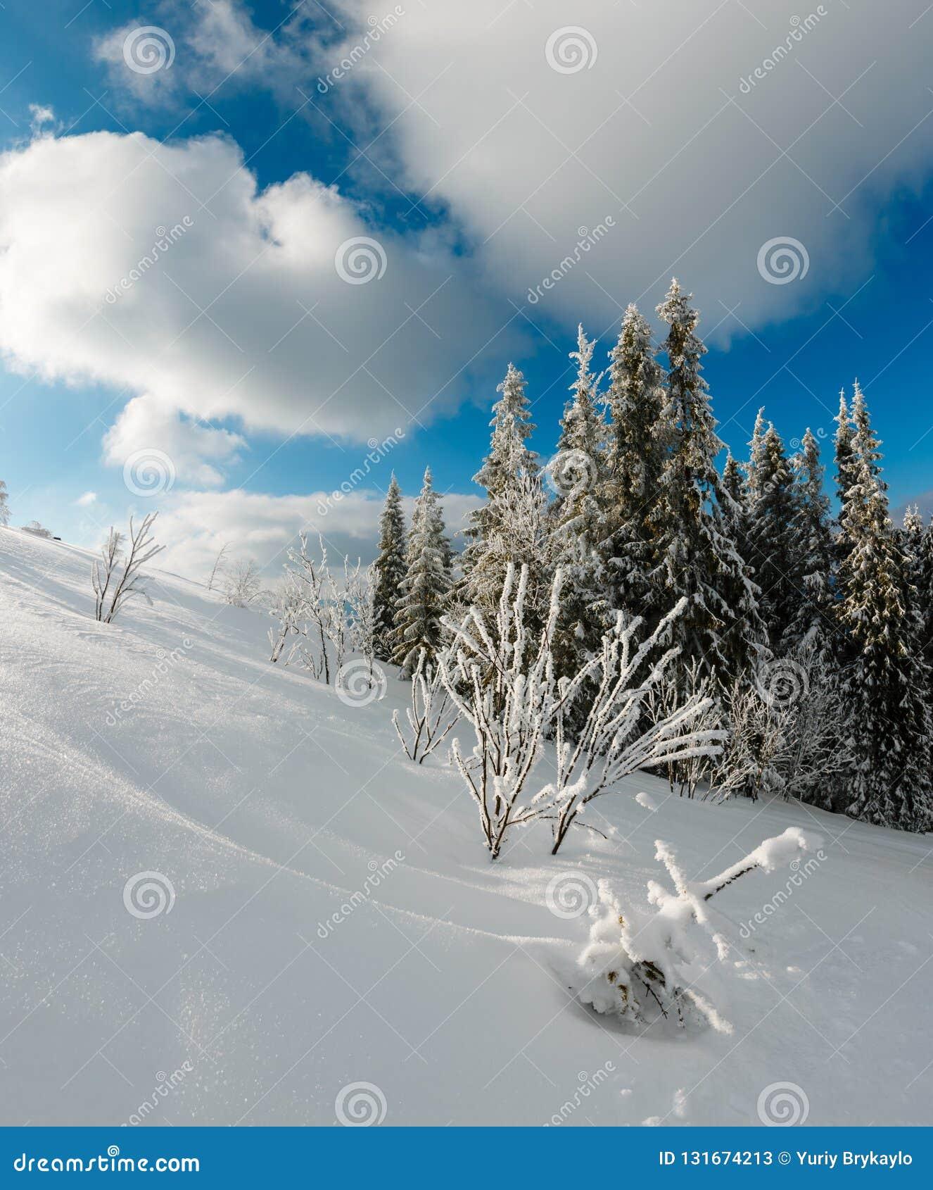 与美丽的结霜树和随风飘飞的雪的冬天镇静山风景在倾斜喀尔巴阡山脉,乌克兰 综合