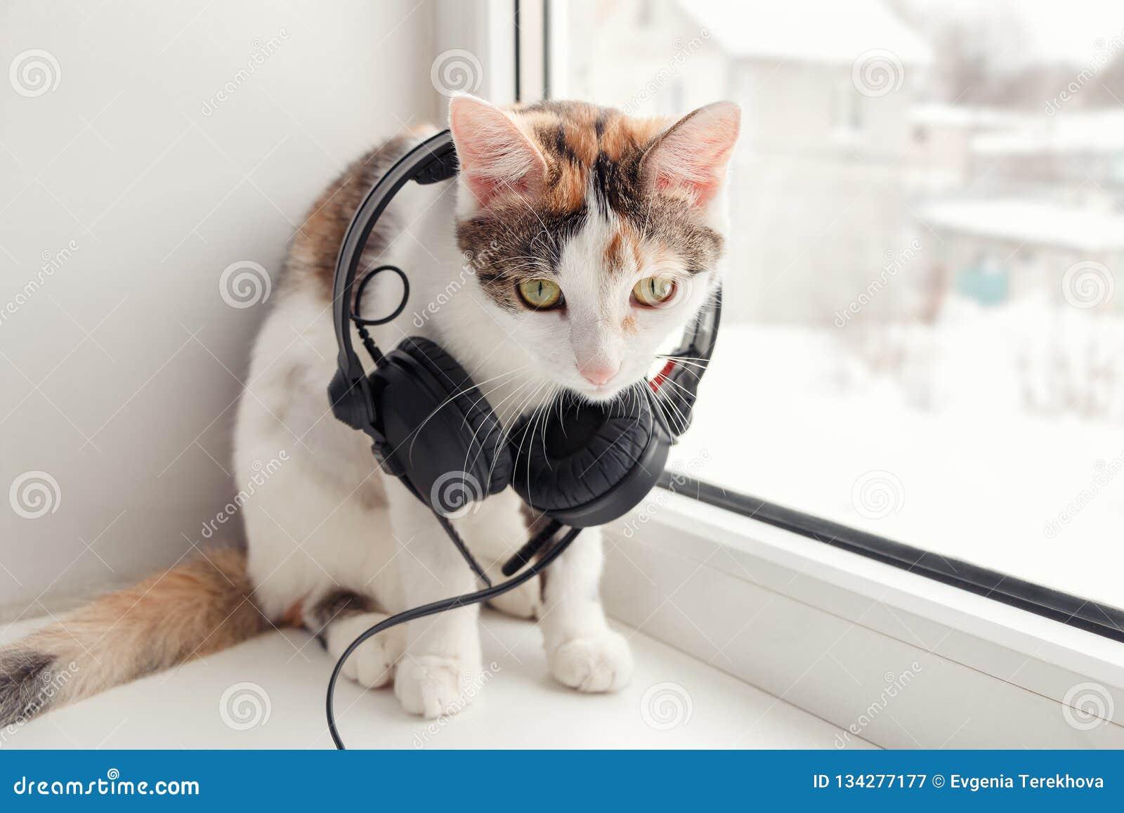 与耳机的一只猫在窗台
