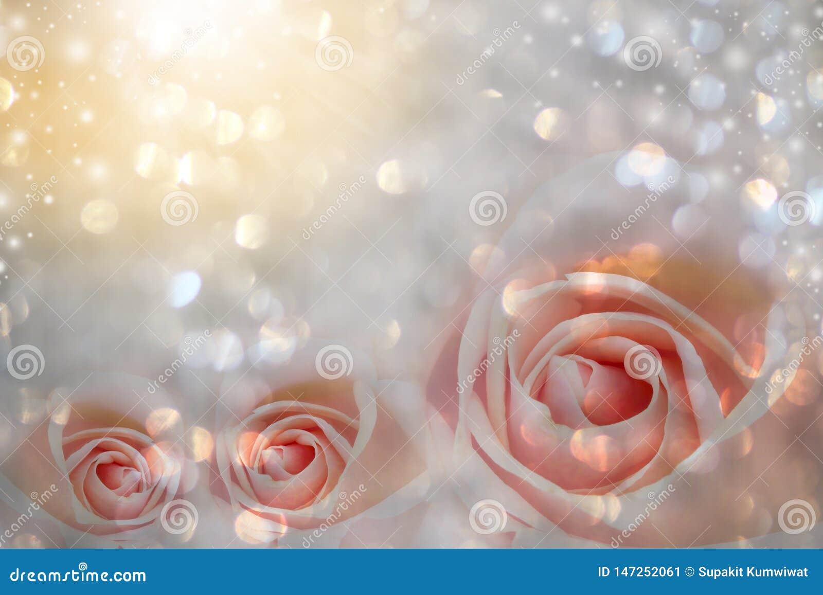 与自由空间的桃红色玫瑰花束