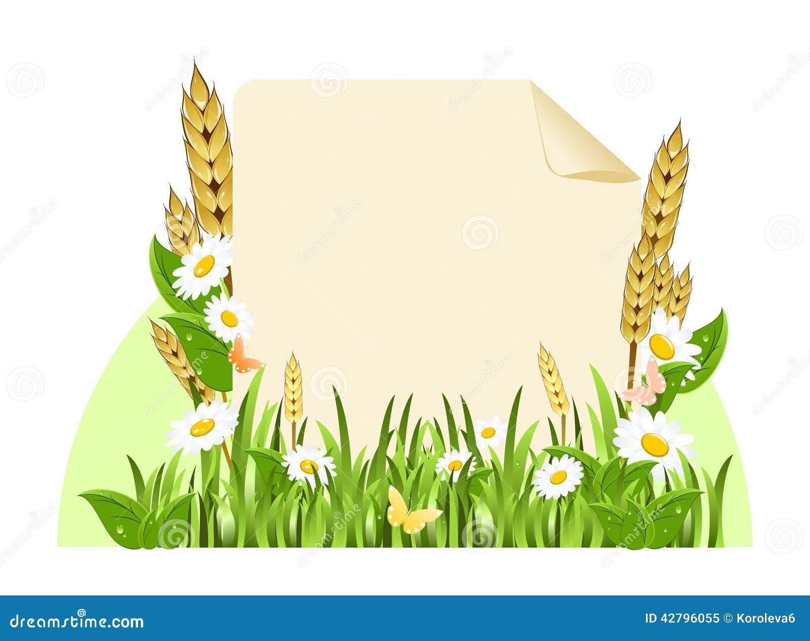 花和玉米穗围拢的纸纸卷.图片