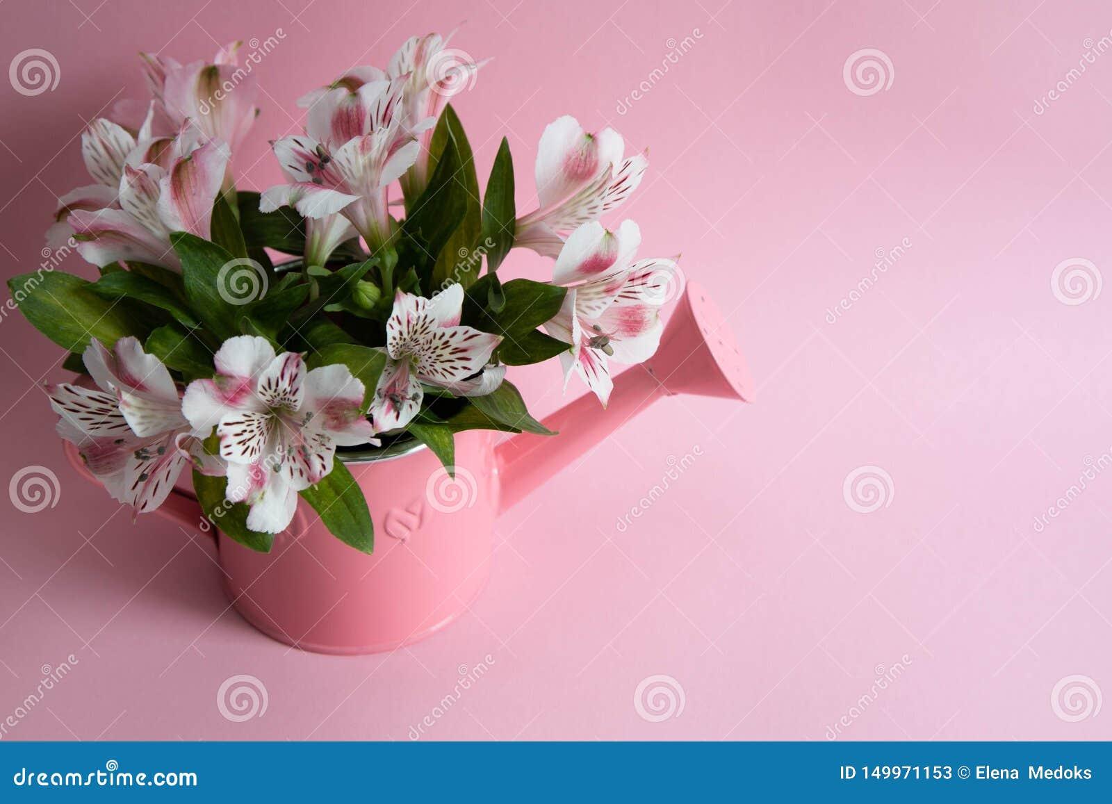 与花的桃红色喷壶,与alstromeria的喷壶,在一把喷壶的一花束在桃红色背景