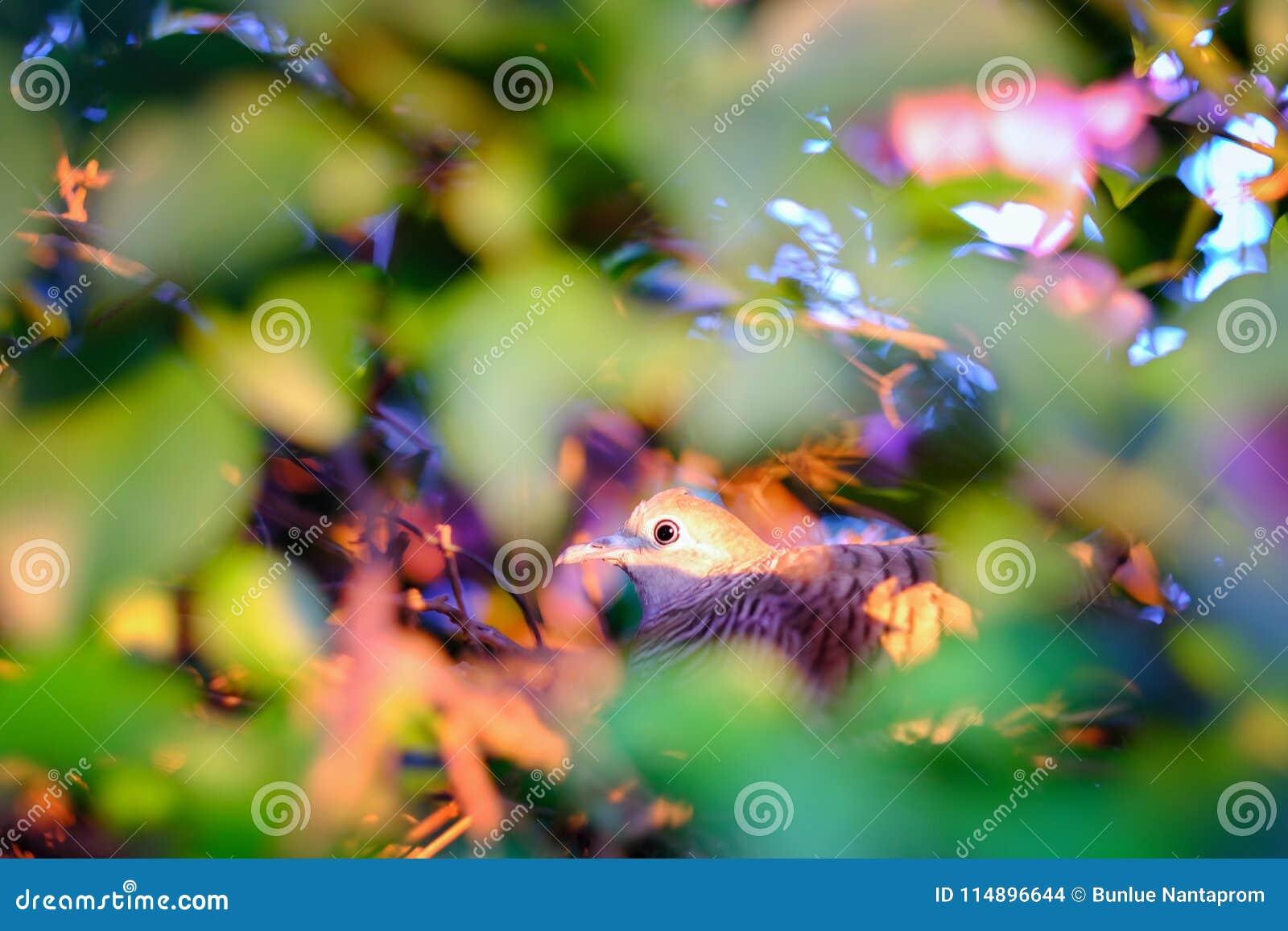 与花的特写镜头美丽的眼睛鸟, a的动物照片