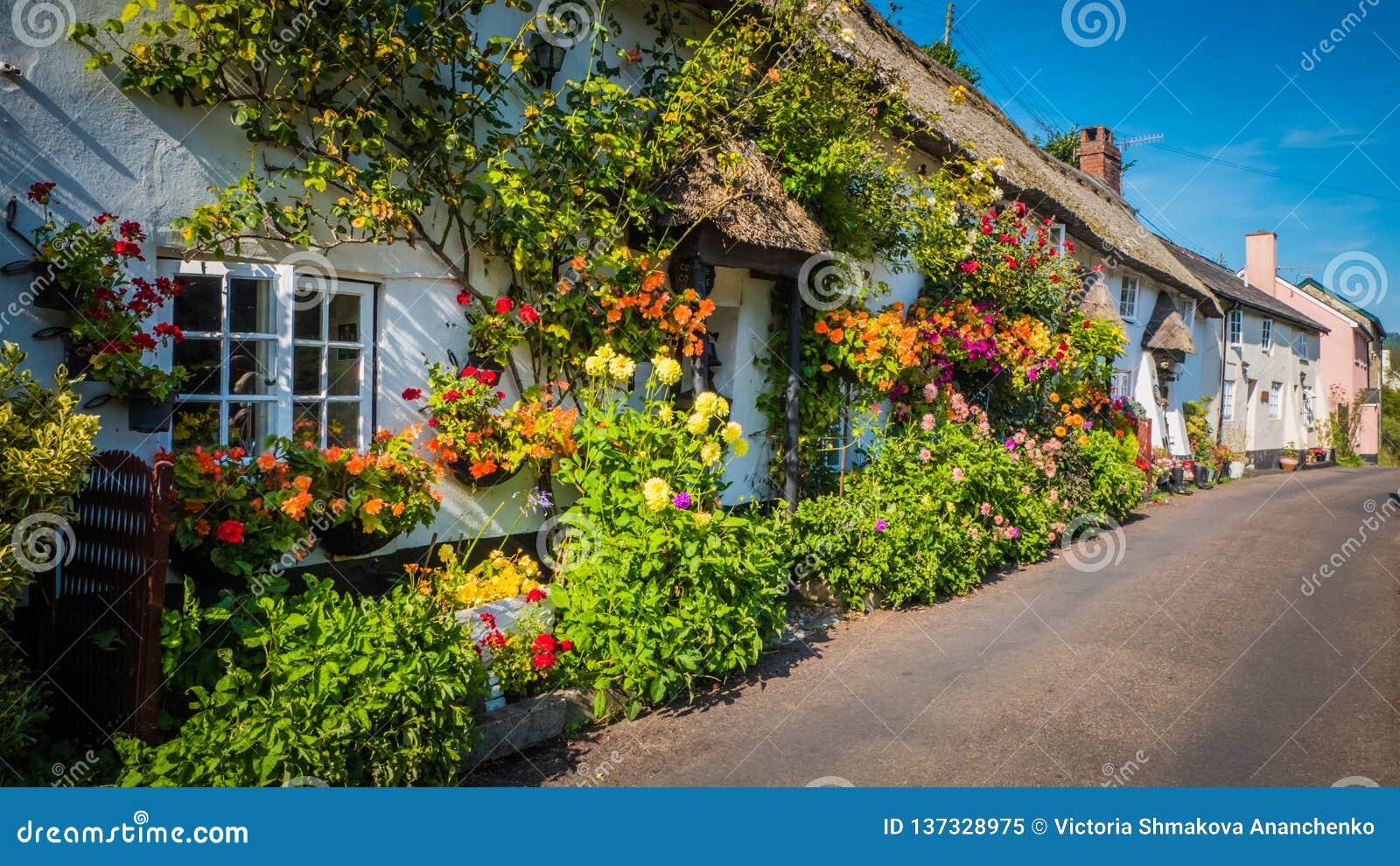 与花的老英国村庄在莱姆里杰斯,多西特,英国附近