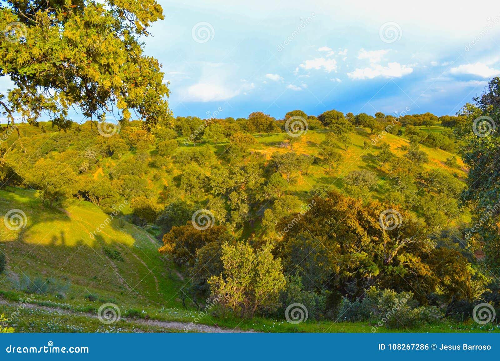 与草和橄榄的自然和五颜六色的领域在一个晴天