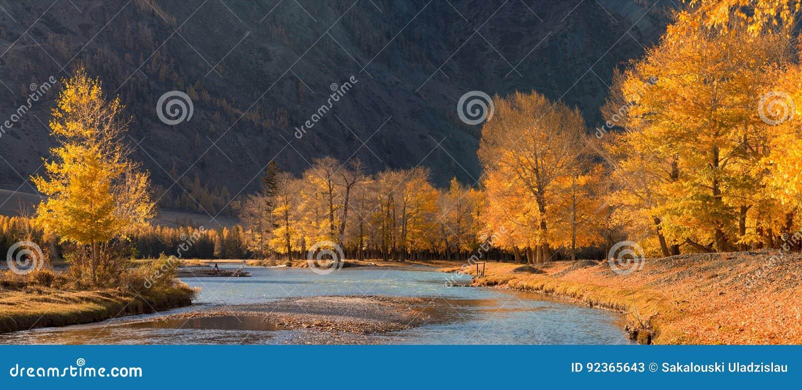 与被日光照射了白杨树和蓝色河的一个美好的秋天山风景 有下落的叶子的秋天森林