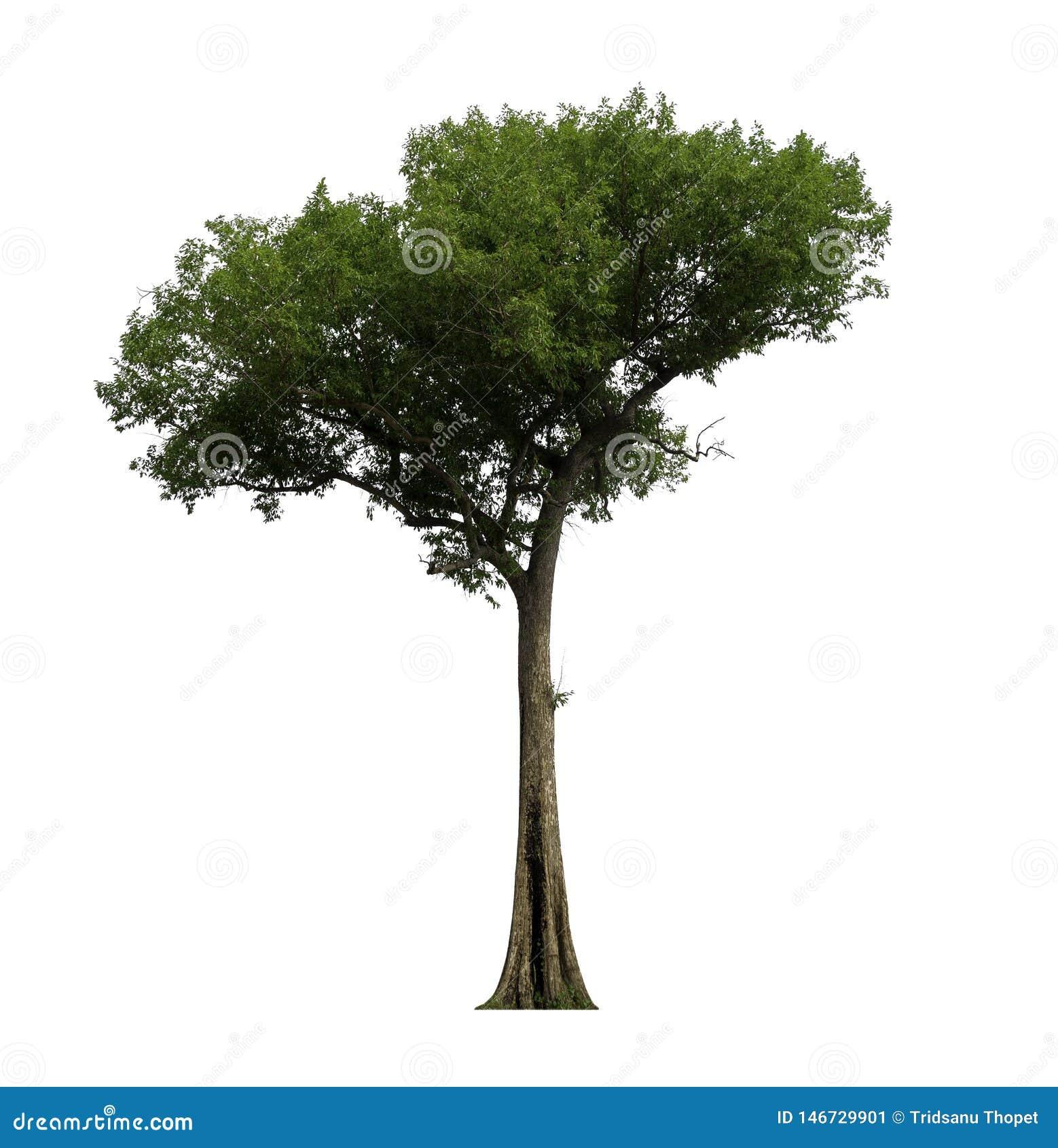 与裁减路线的唯一树