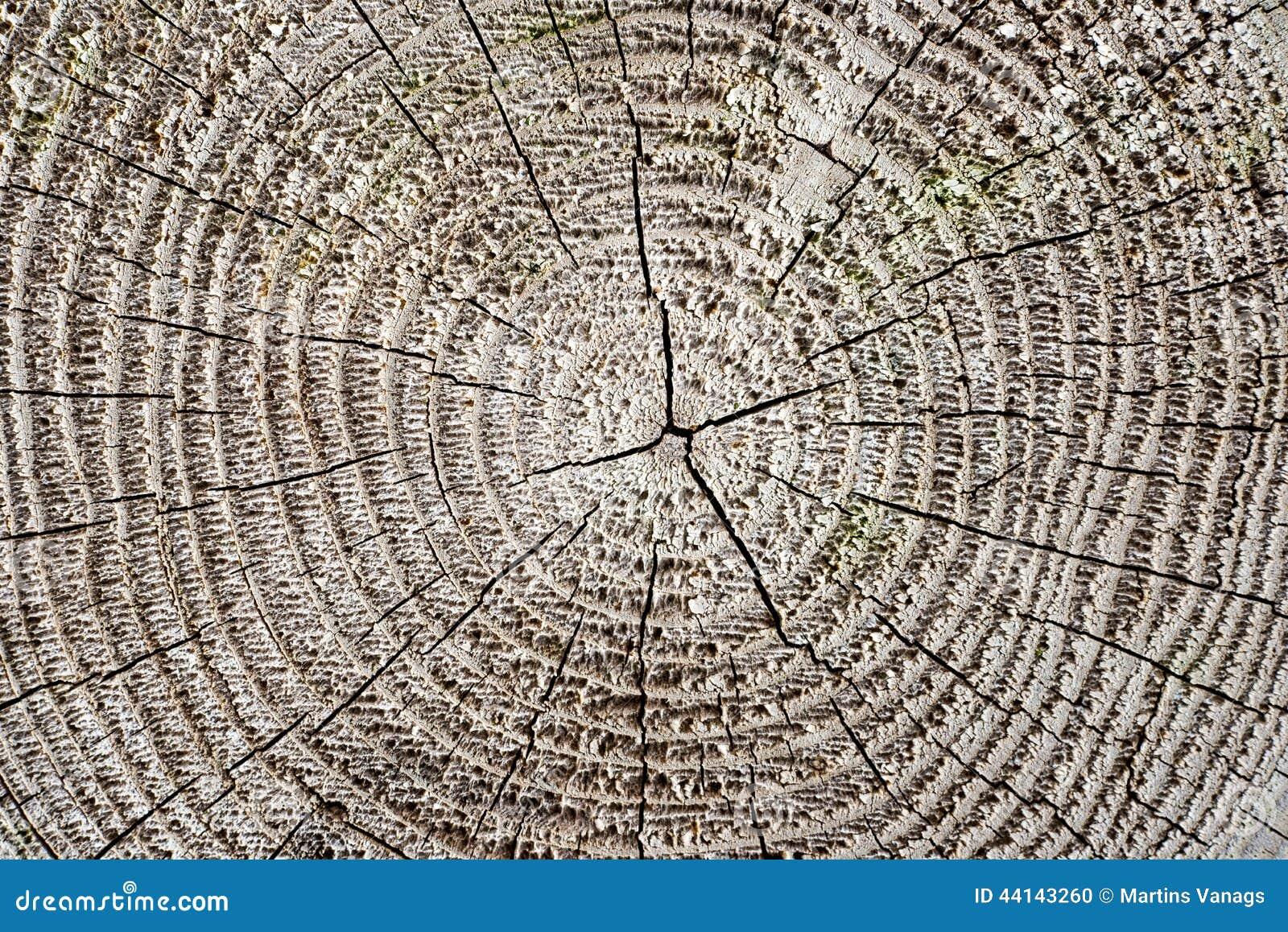 与裂片和镇压的木板条