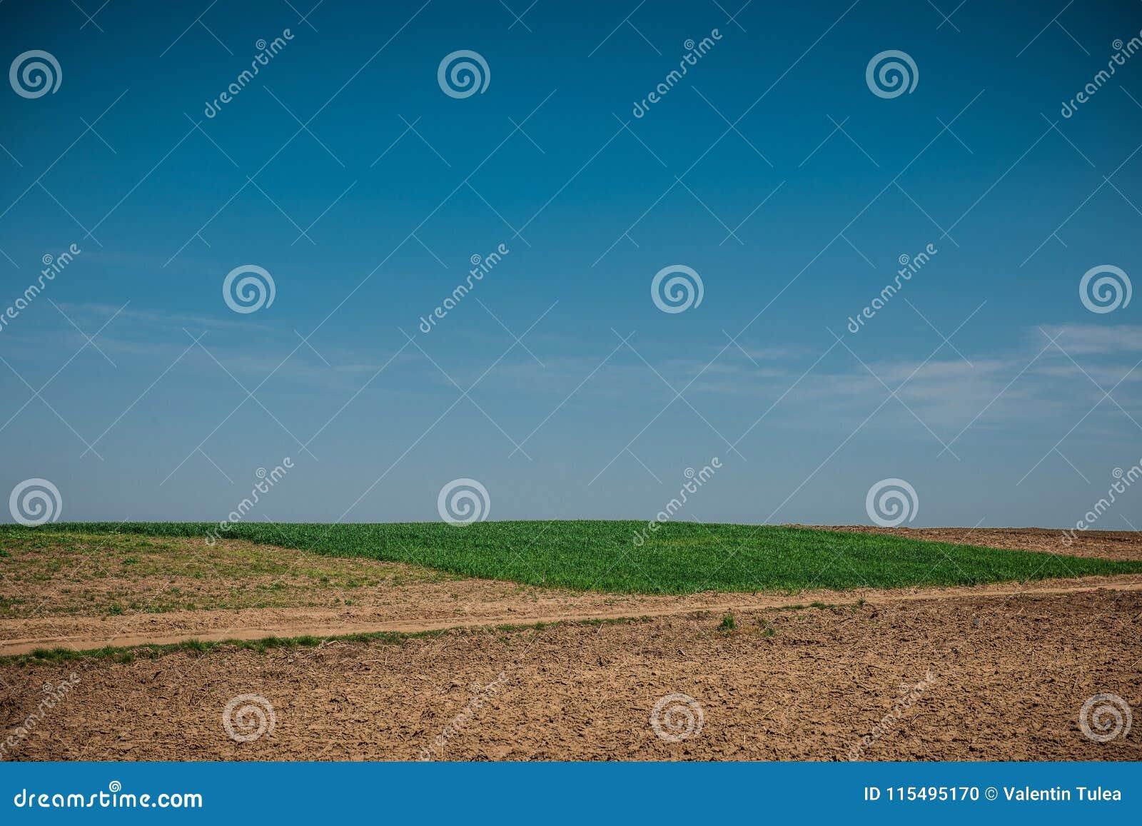 与轮子轨道的未使用的领域在麦子土地附近的春天 与蓝天的土纹理 国家土领域纹理