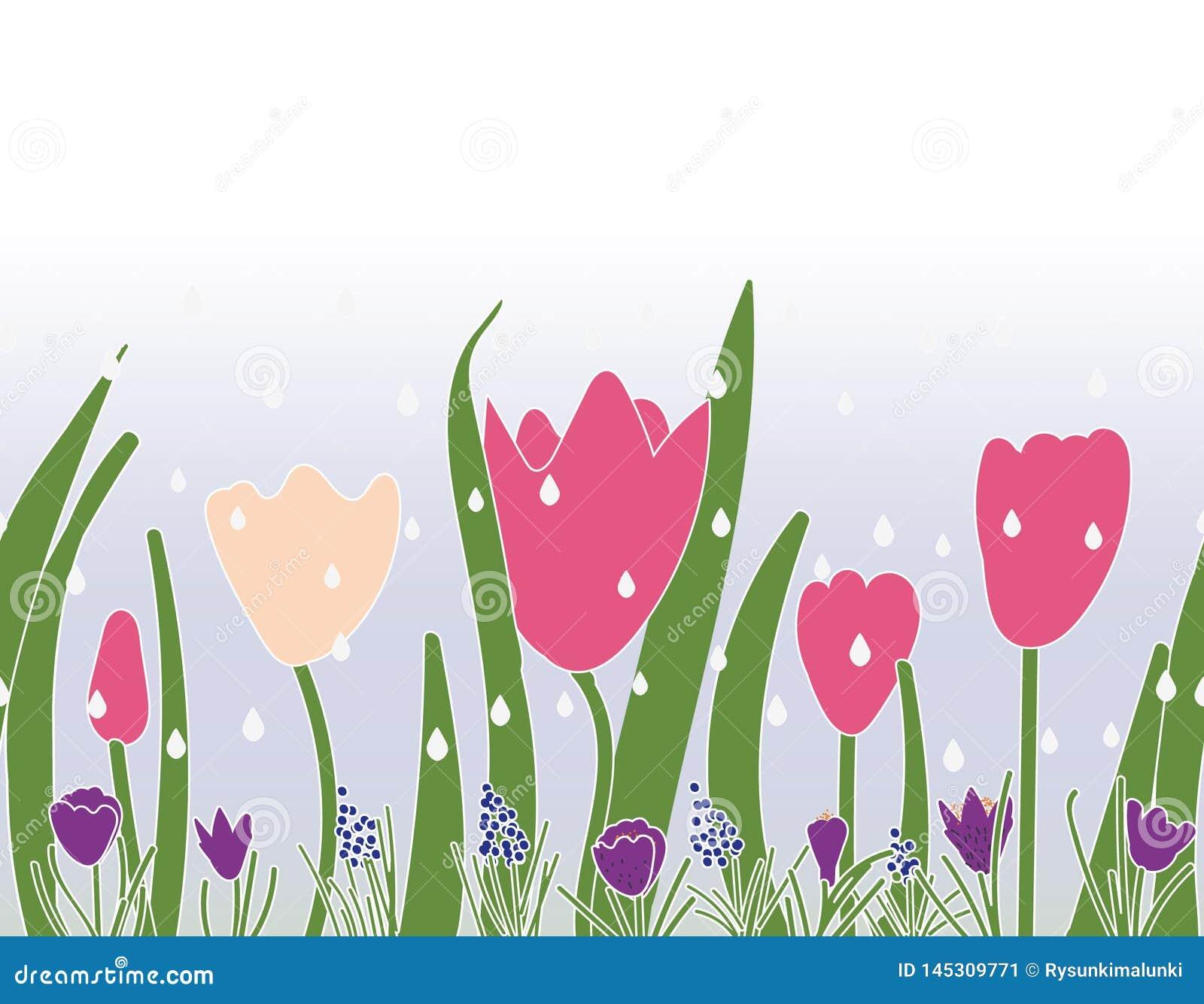 与郁金香番红花和葡萄风信花的无缝的传染媒介边界印刷品设计