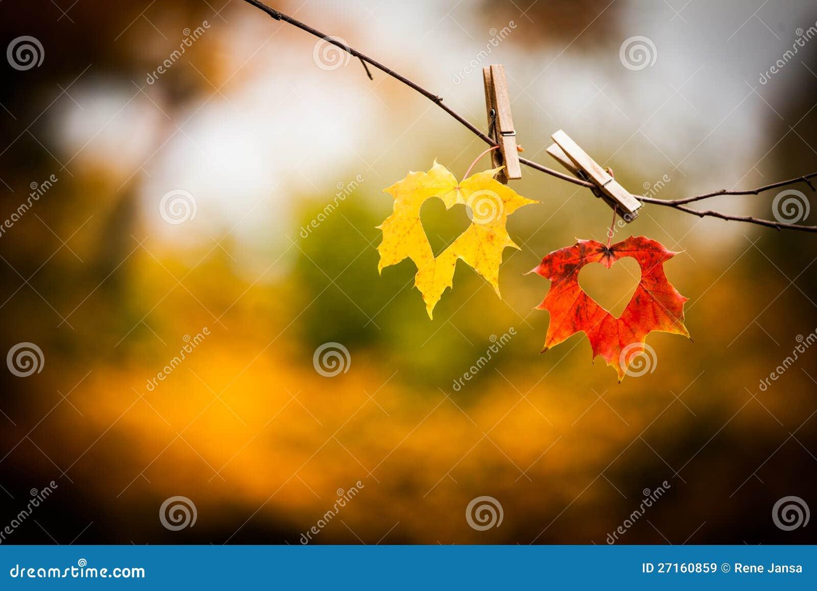 与重点的秋叶