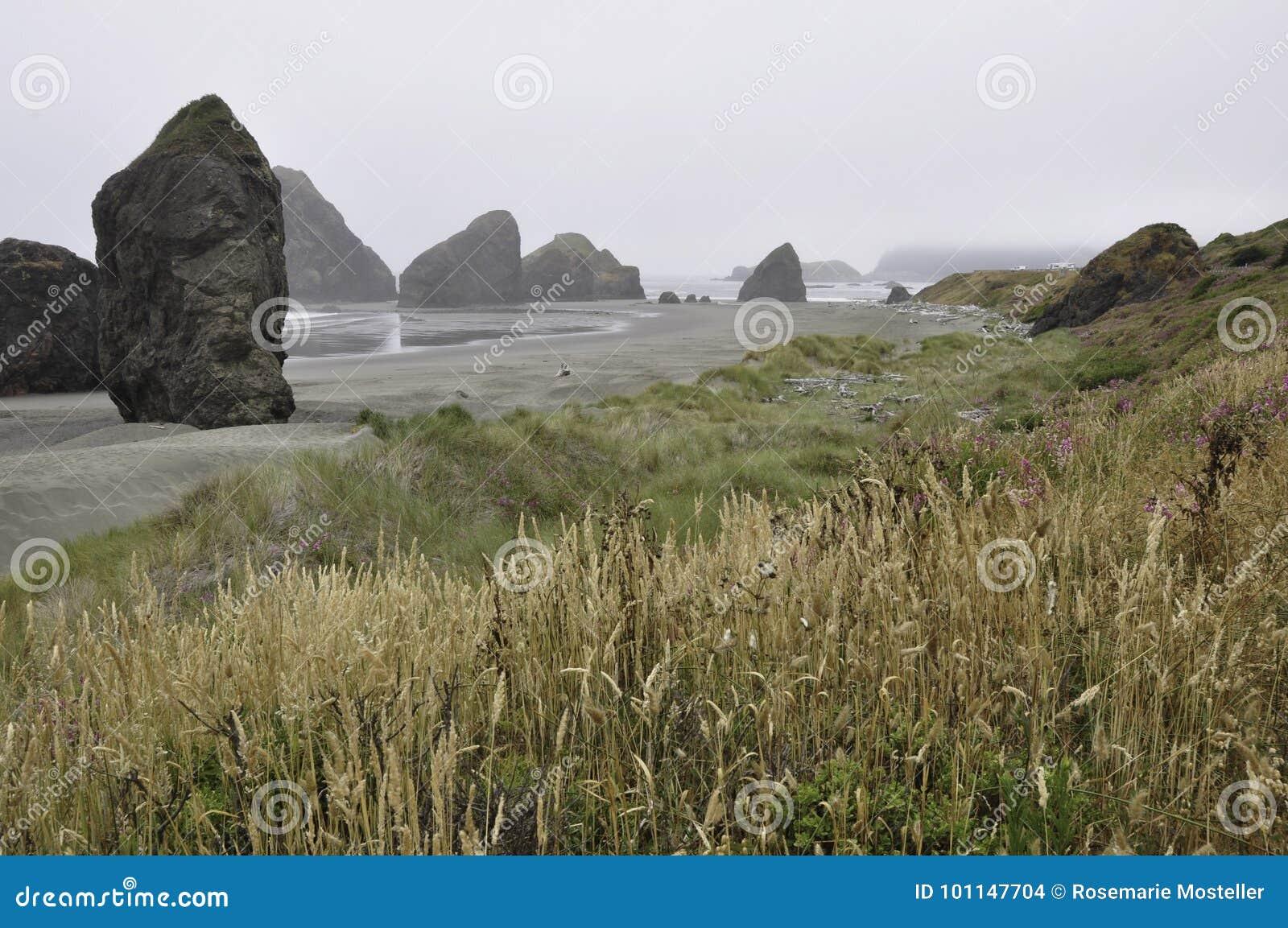 与野草和雾的俄勒冈海岸