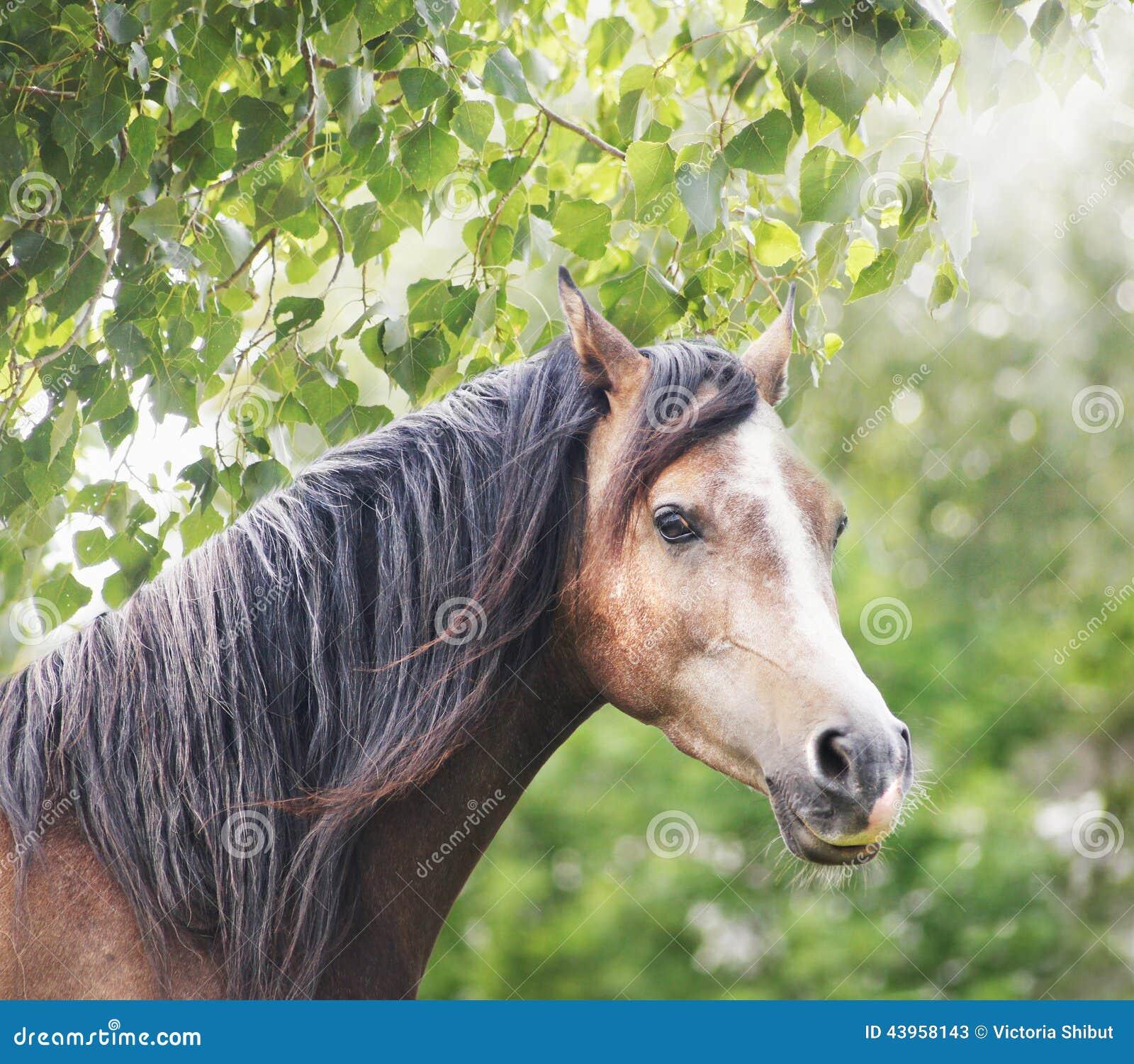 与长的鬃毛的布朗马在太阳和叶子