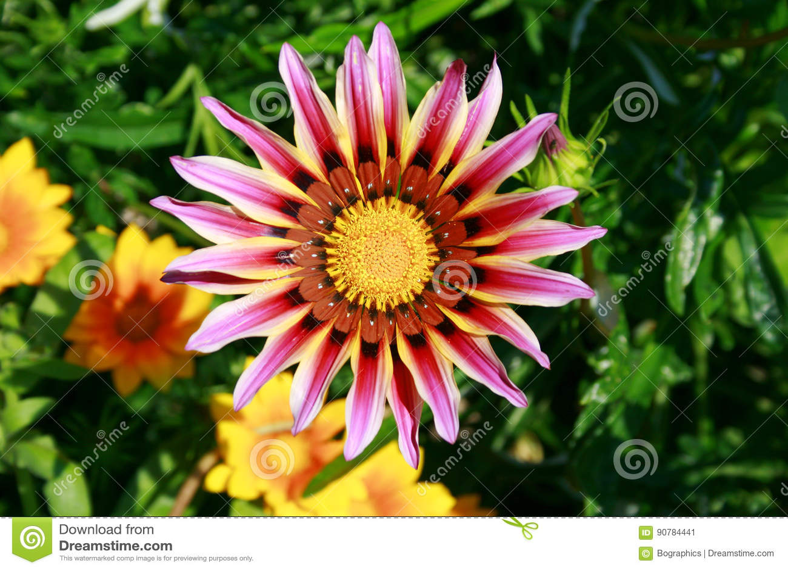 与长的紫色瓣的大花