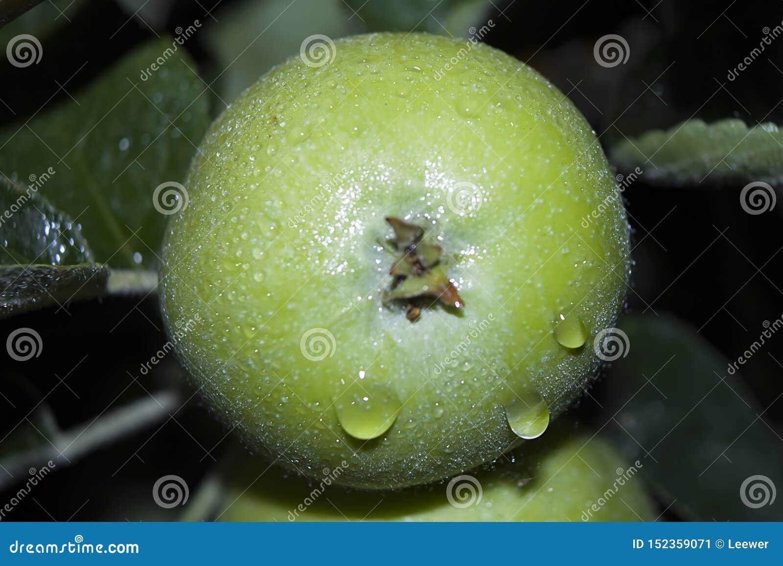 与雨珠的绿色苹果关闭