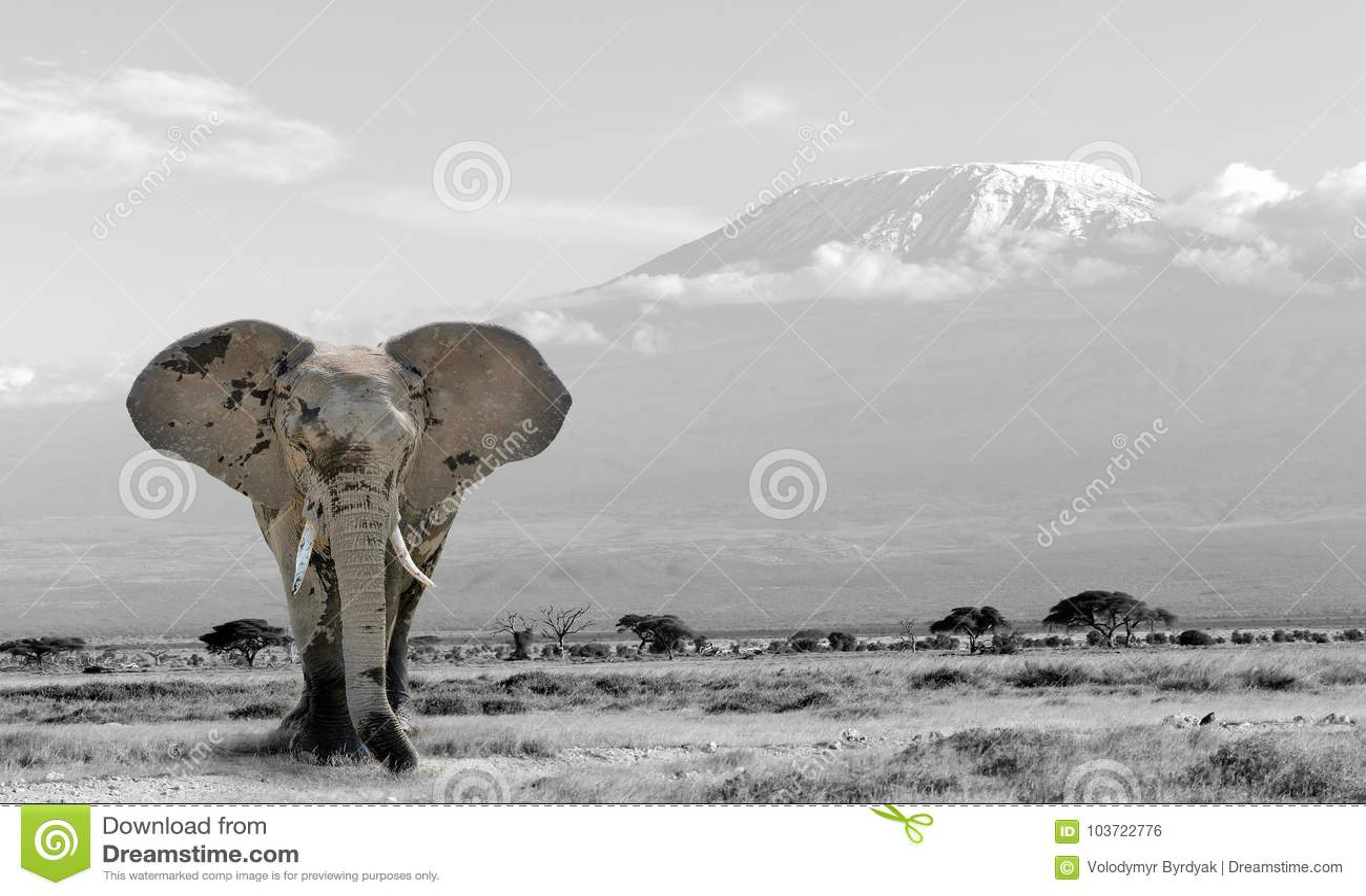 与颜色大象的黑白摄影