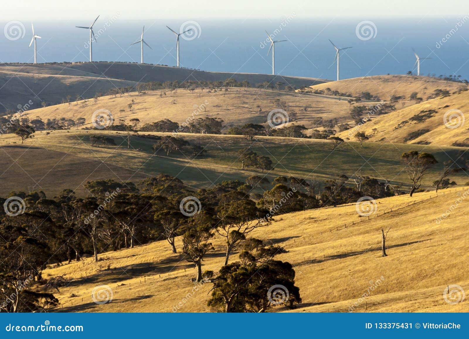 与风力场的农村风景在大洋路,澳大利亚附近